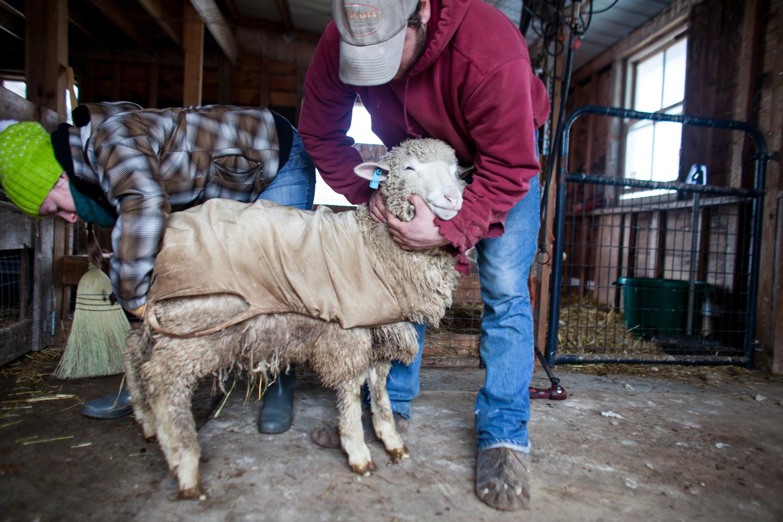 SheepShearing-109.jpg