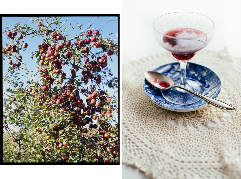 applesElderberry.jpg