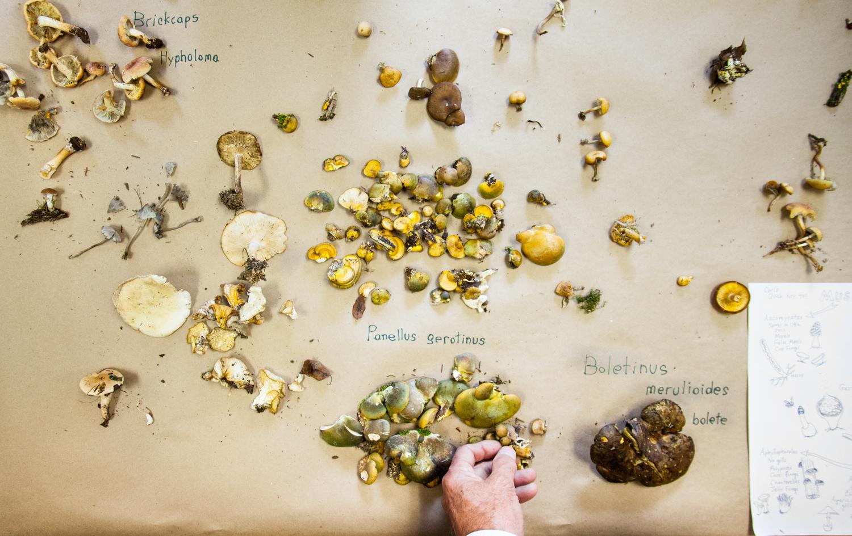 MushroomForay-303.jpg