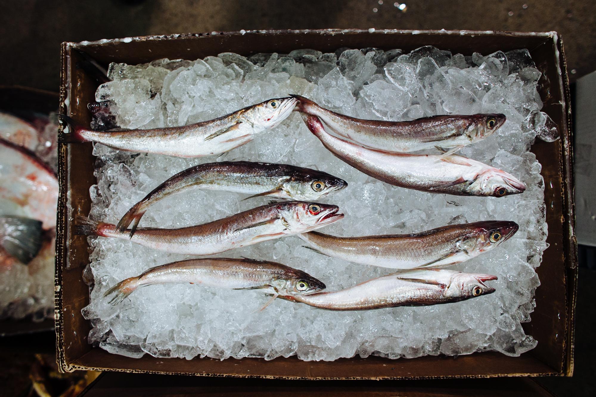 HeatherPhelpsLipton-Fish-HuntsPoint-FultonFishMarket-4.jpg