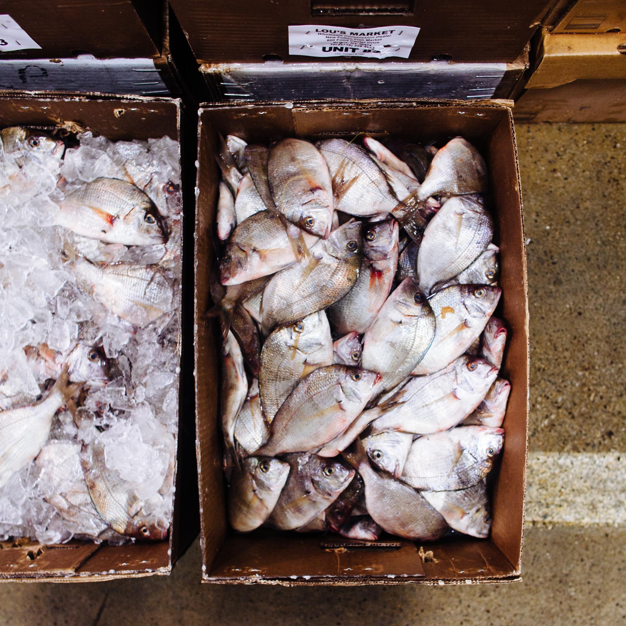 HeatherPhelpsLipton-Fish-HuntsPoint-FultonFishMarket-9.jpg