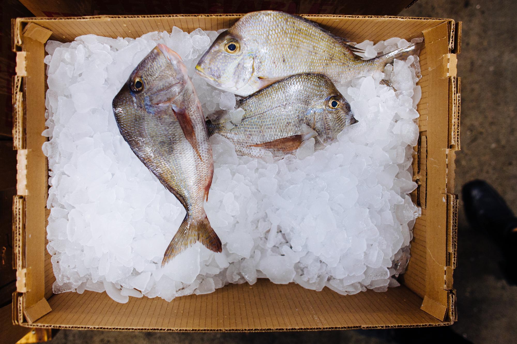 HeatherPhelpsLipton-Fish-HuntsPoint-FultonFishMarket-10.jpg