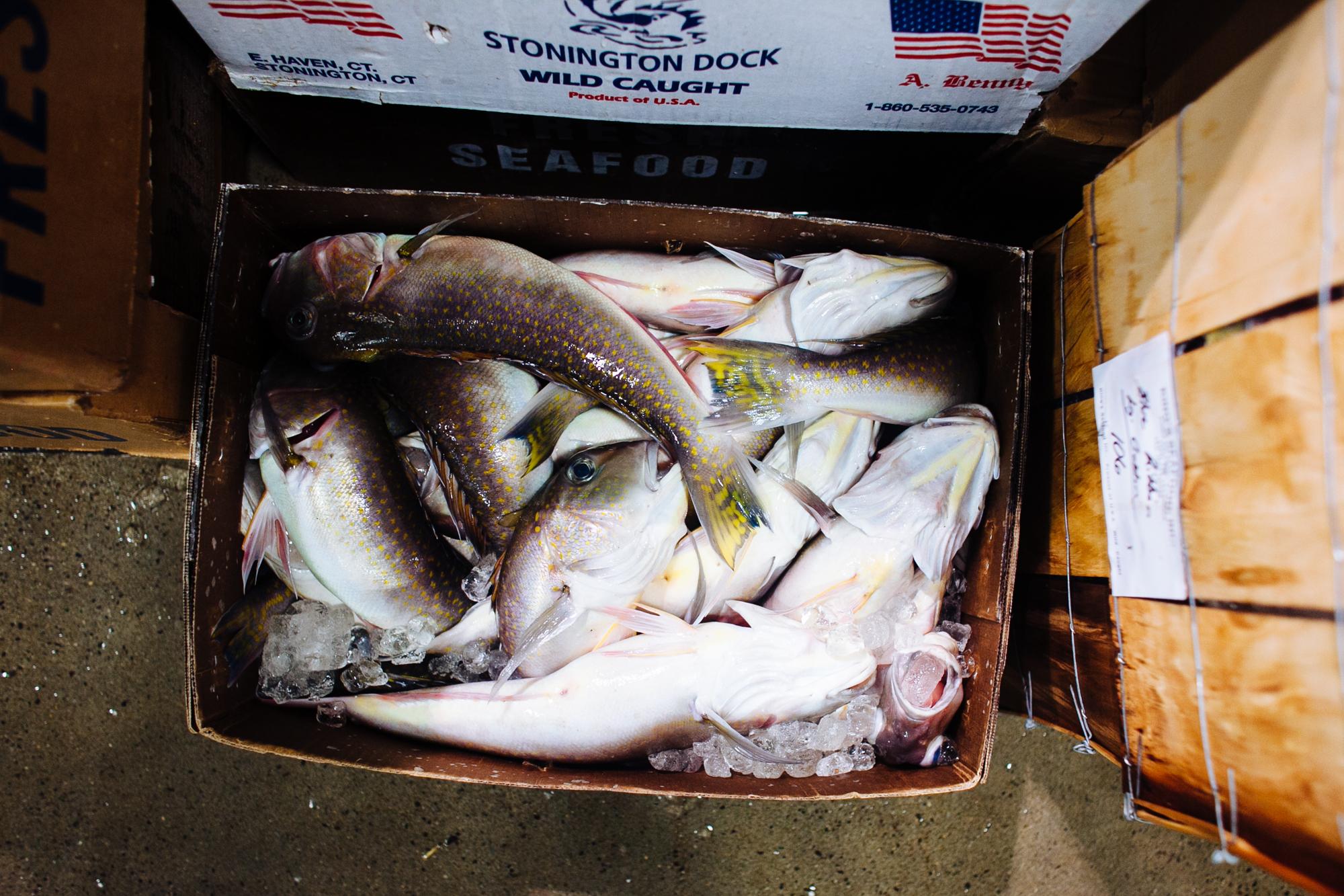 HeatherPhelpsLipton-Fish-HuntsPoint-FultonFishMarket-12.jpg