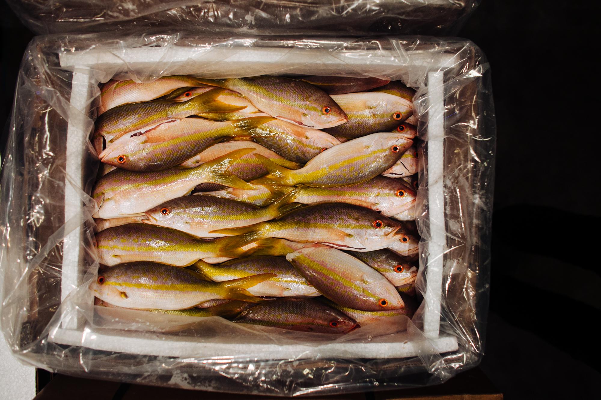 HeatherPhelpsLipton-Fish-HuntsPoint-FultonFishMarket-16.jpg
