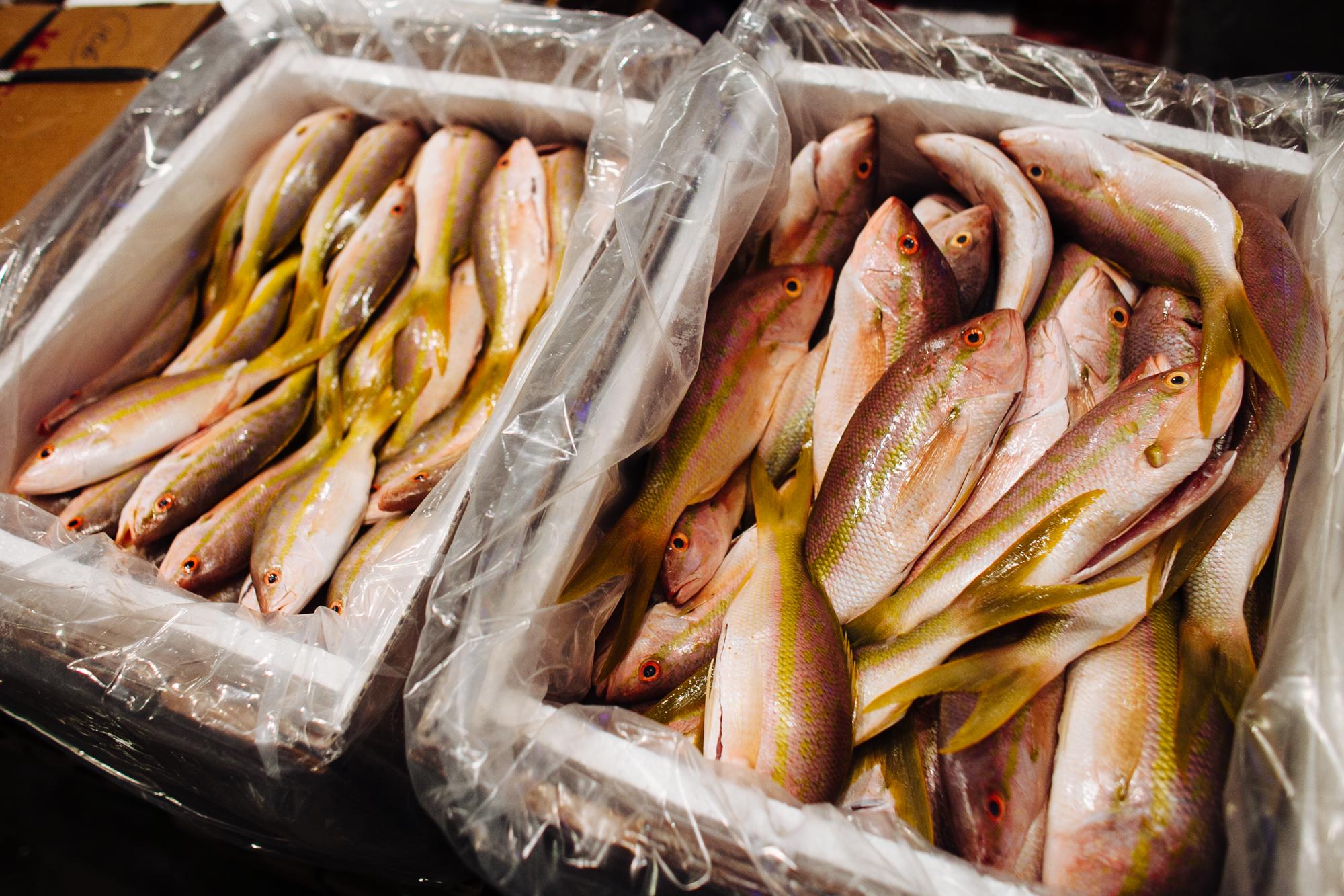 HeatherPhelpsLipton-Fish-HuntsPoint-FultonFishMarket-17.jpg