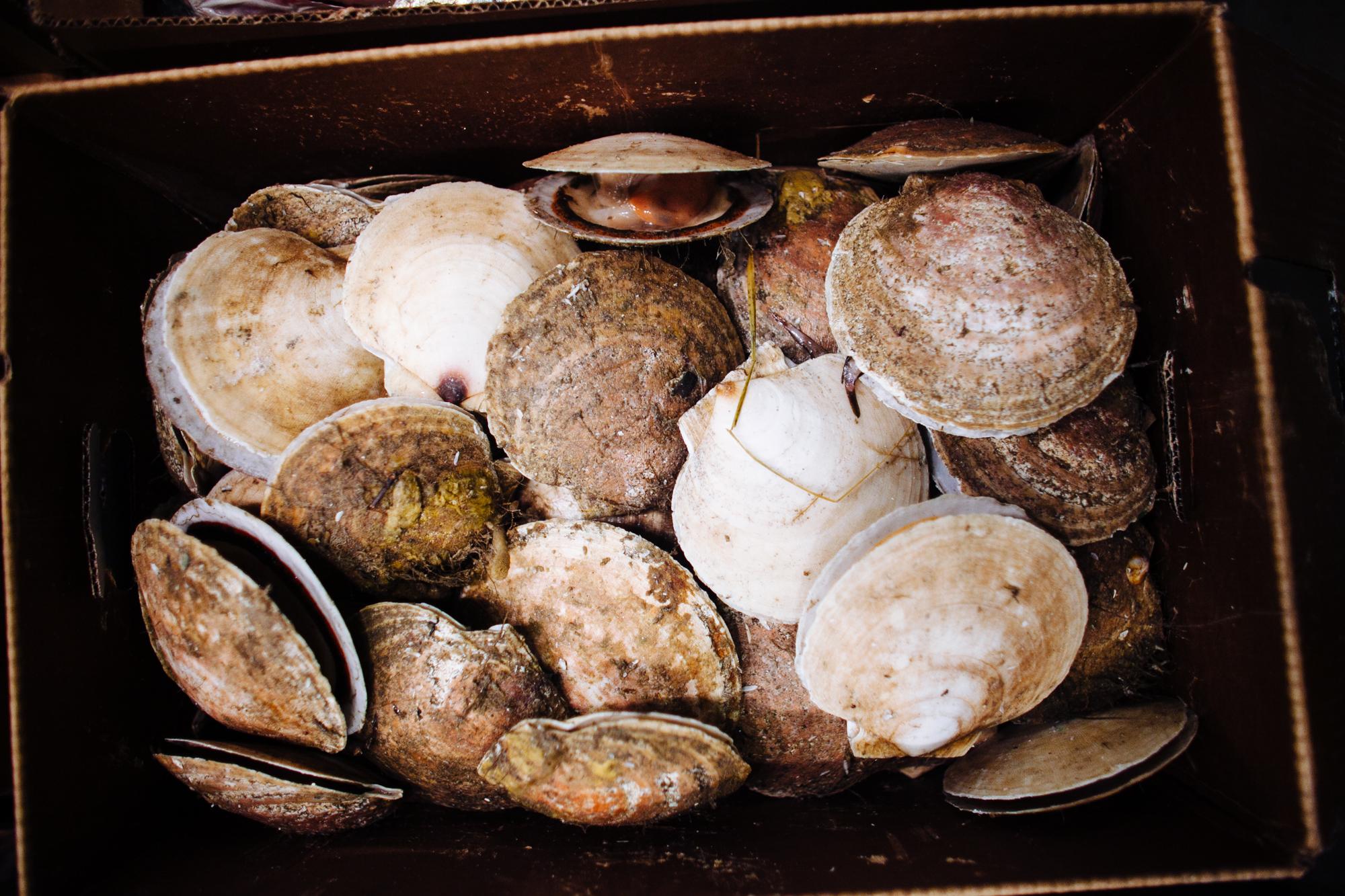 HeatherPhelpsLipton-Fish-HuntsPoint-FultonFishMarket-20.jpg