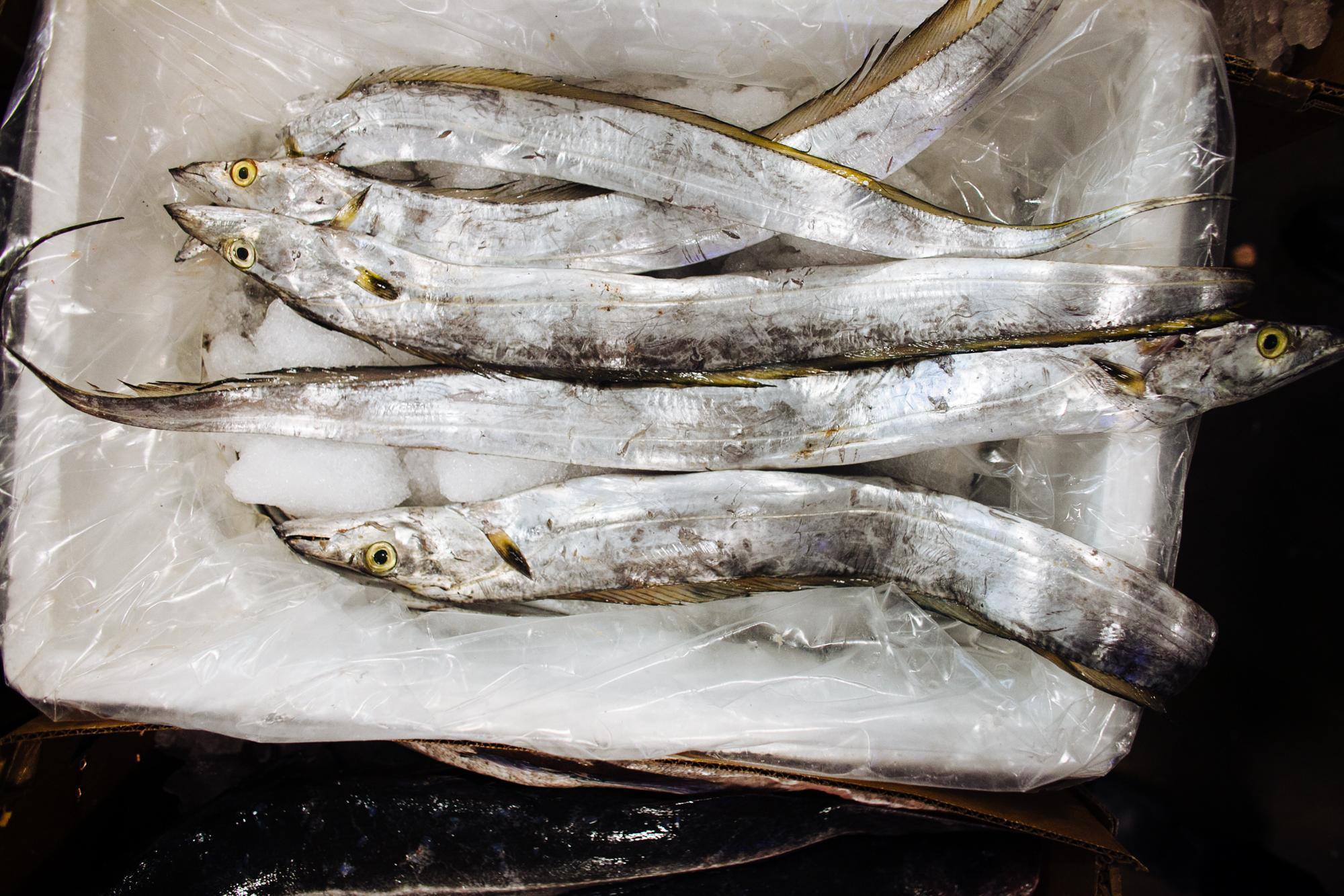 HeatherPhelpsLipton-Fish-HuntsPoint-FultonFishMarket-21.jpg