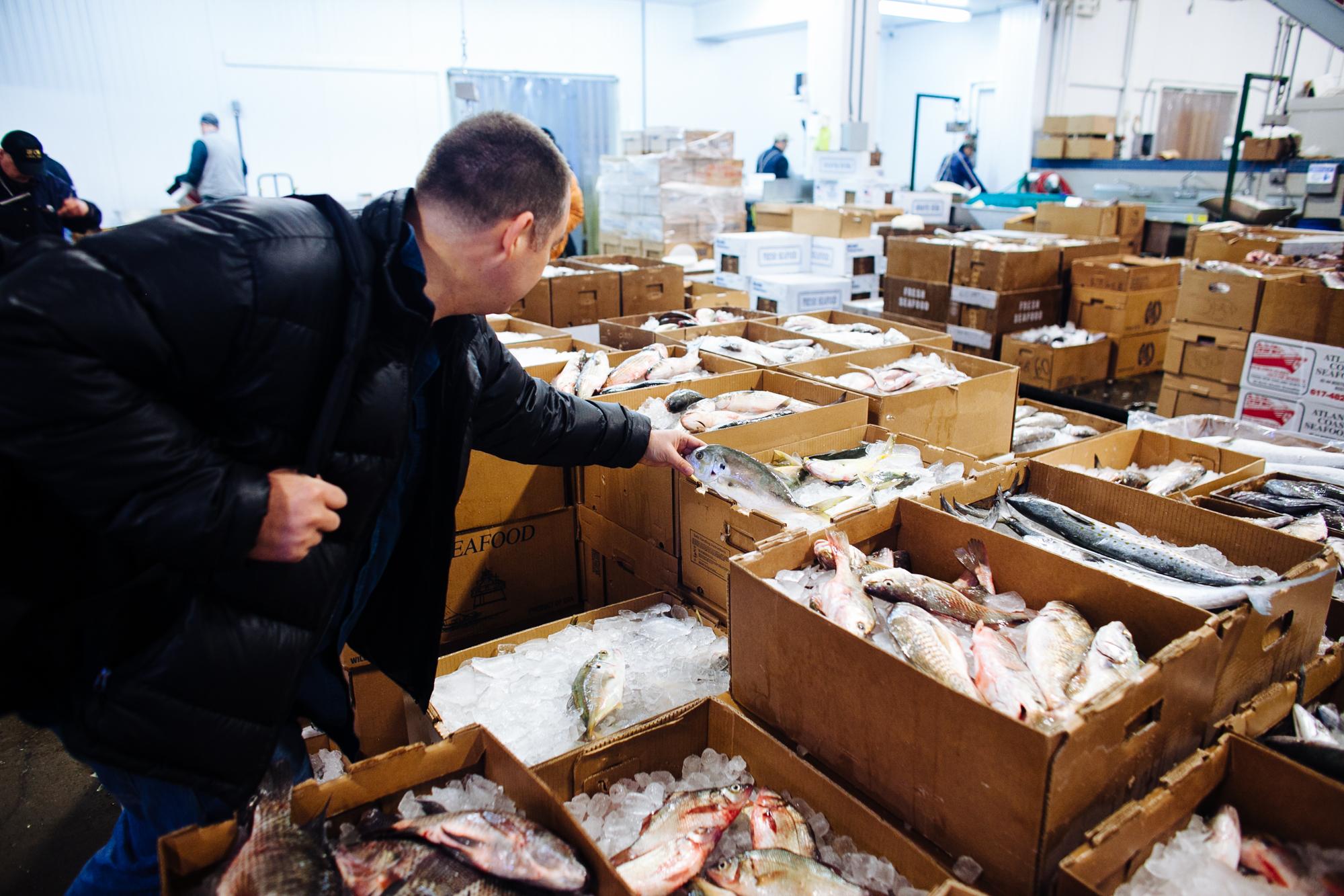 HeatherPhelpsLipton-Fish-HuntsPoint-FultonFishMarket-22.jpg