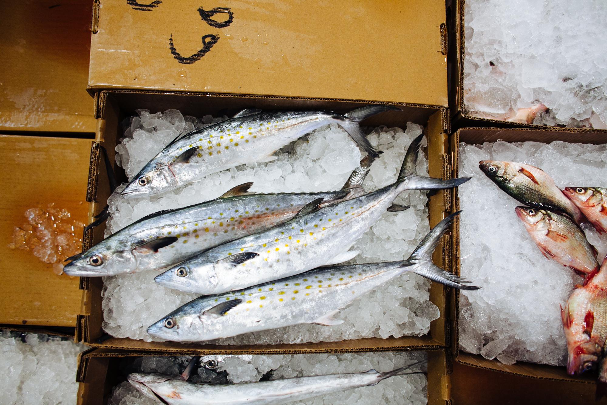HeatherPhelpsLipton-Fish-HuntsPoint-FultonFishMarket-24.jpg