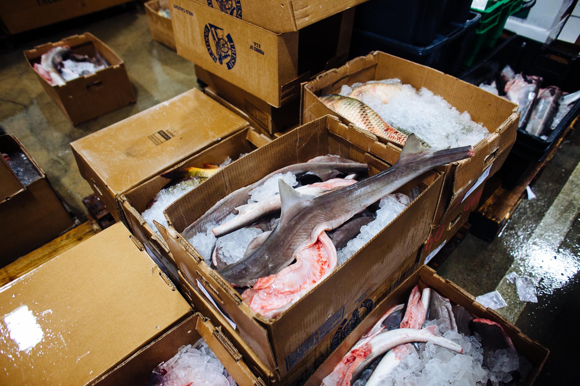 HeatherPhelpsLipton-Fish-HuntsPoint-FultonFishMarket-28.jpg