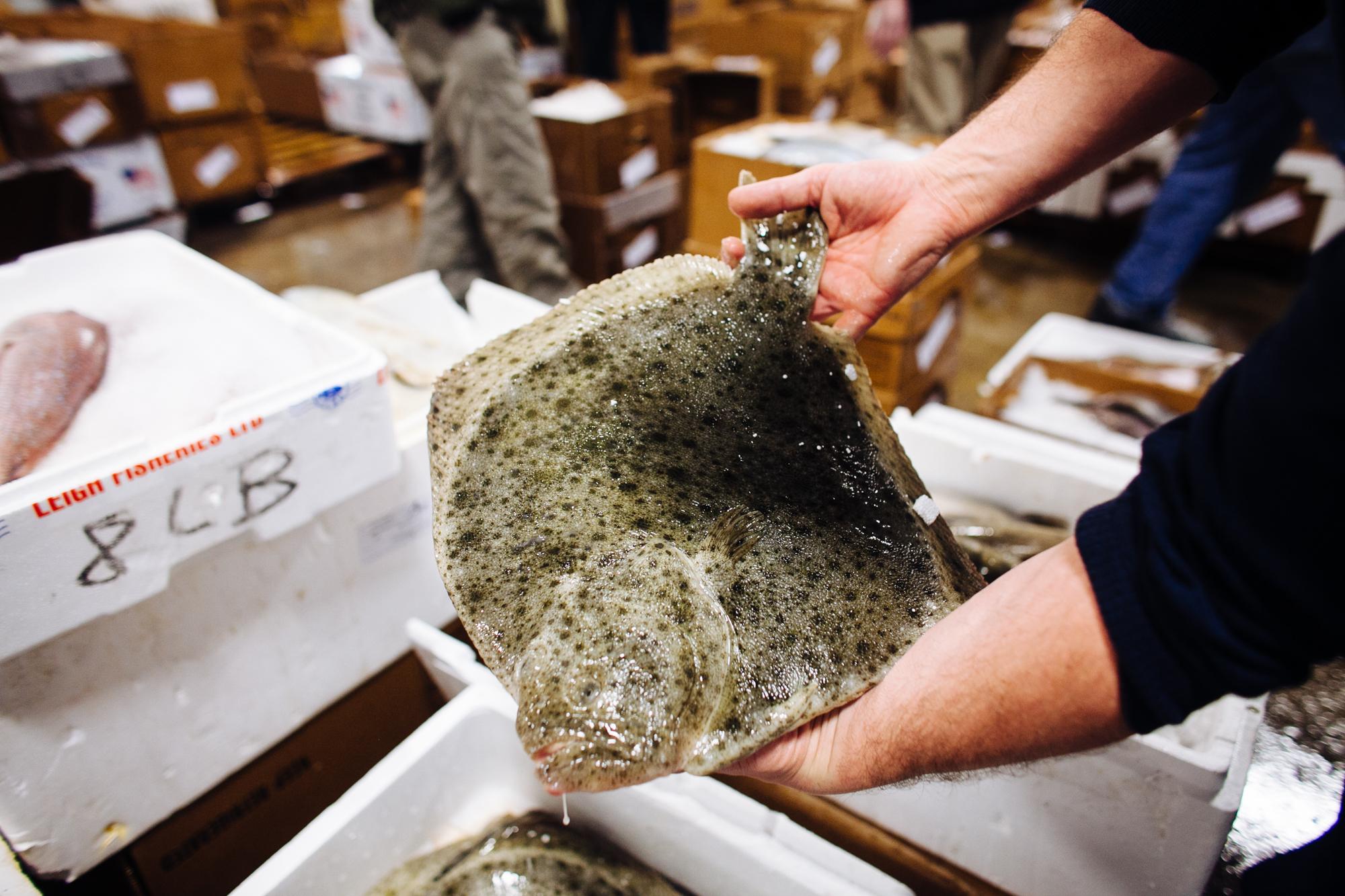 HeatherPhelpsLipton-Fish-HuntsPoint-FultonFishMarket-30.jpg