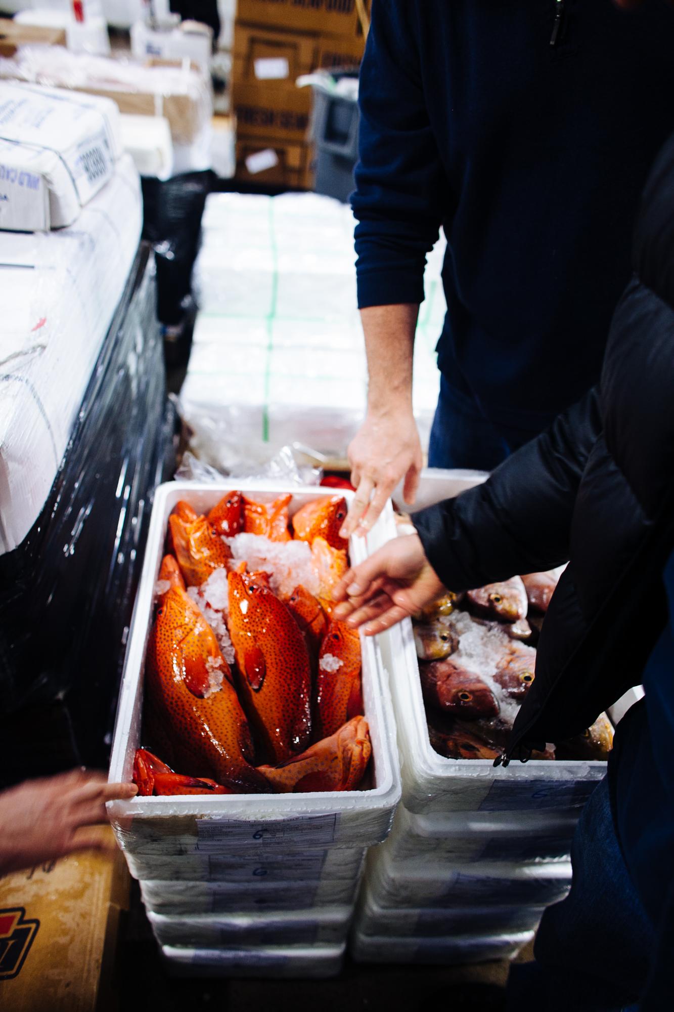 HeatherPhelpsLipton-Fish-HuntsPoint-FultonFishMarket-31.jpg