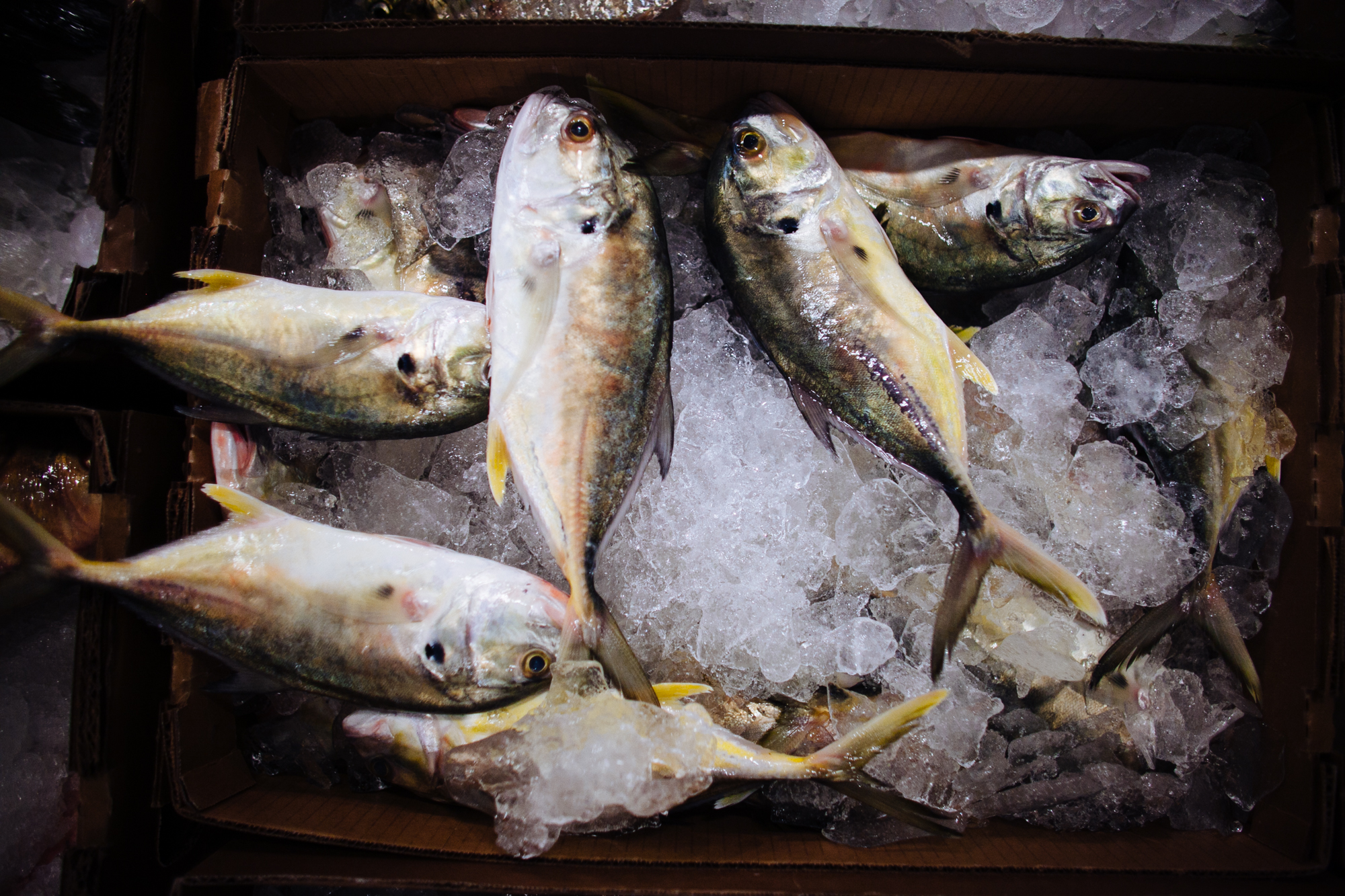 HeatherPhelpsLipton-Fish-HuntsPoint-FultonFishMarket-35.jpg