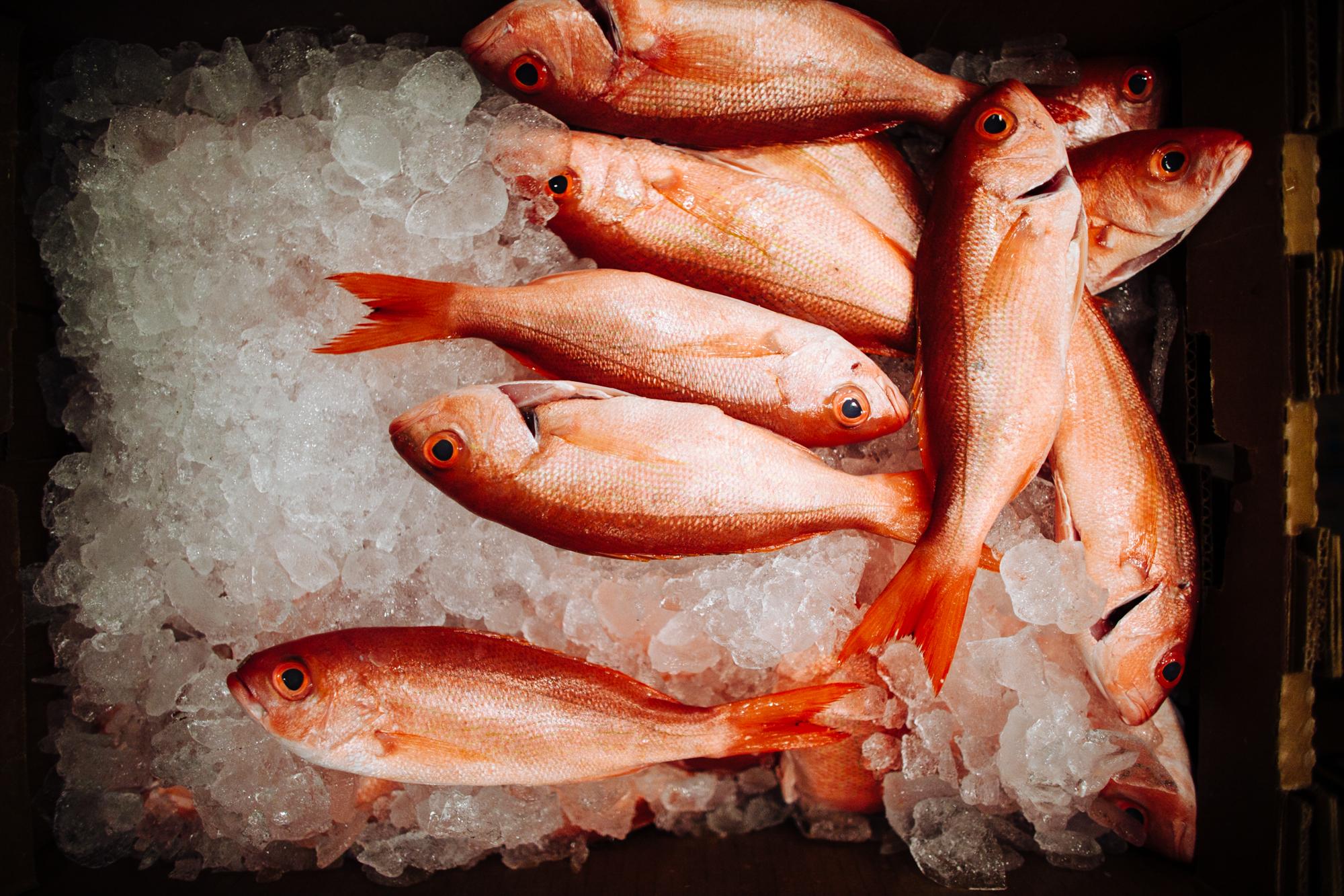 HeatherPhelpsLipton-Fish-HuntsPoint-FultonFishMarket-34.jpg