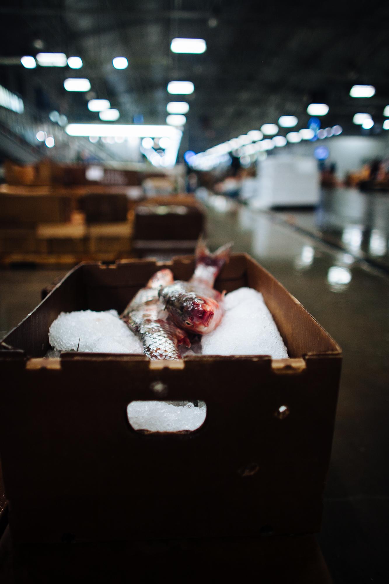 HeatherPhelpsLipton-Fish-HuntsPoint-FultonFishMarket-38.jpg