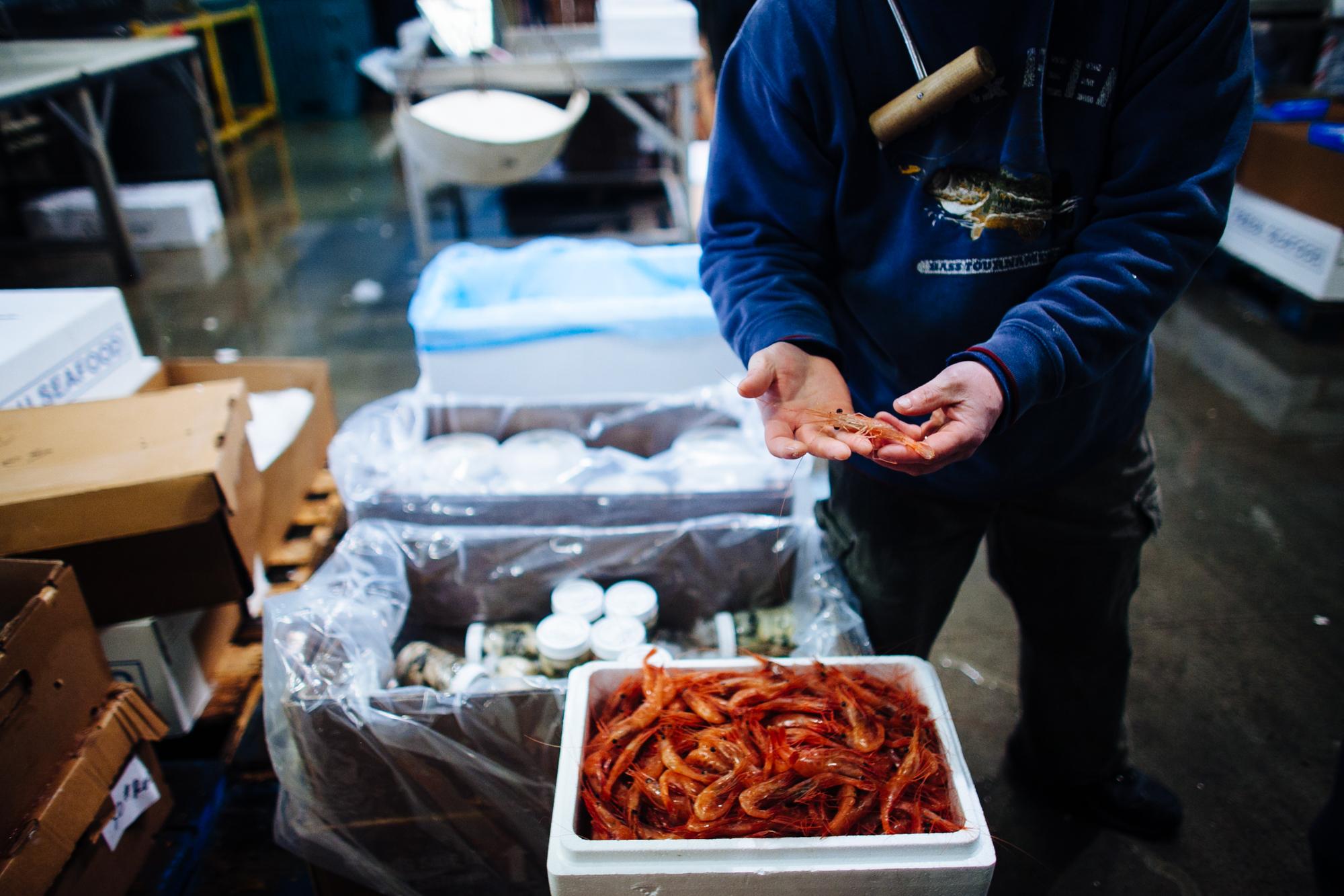 HeatherPhelpsLipton-Fish-HuntsPoint-FultonFishMarket-39.jpg