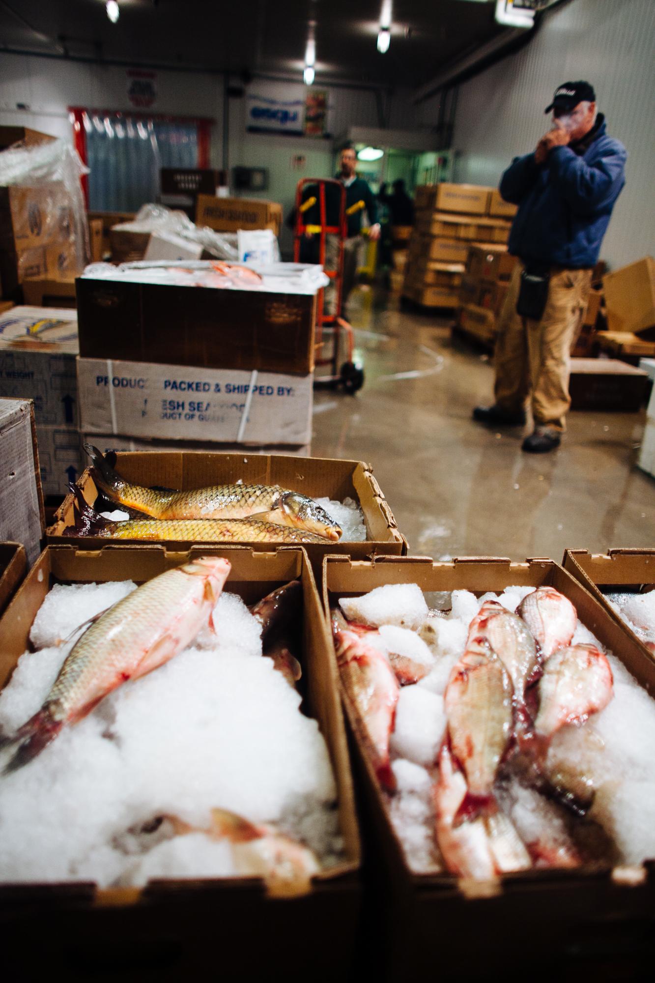 HeatherPhelpsLipton-Fish-HuntsPoint-FultonFishMarket-40.jpg