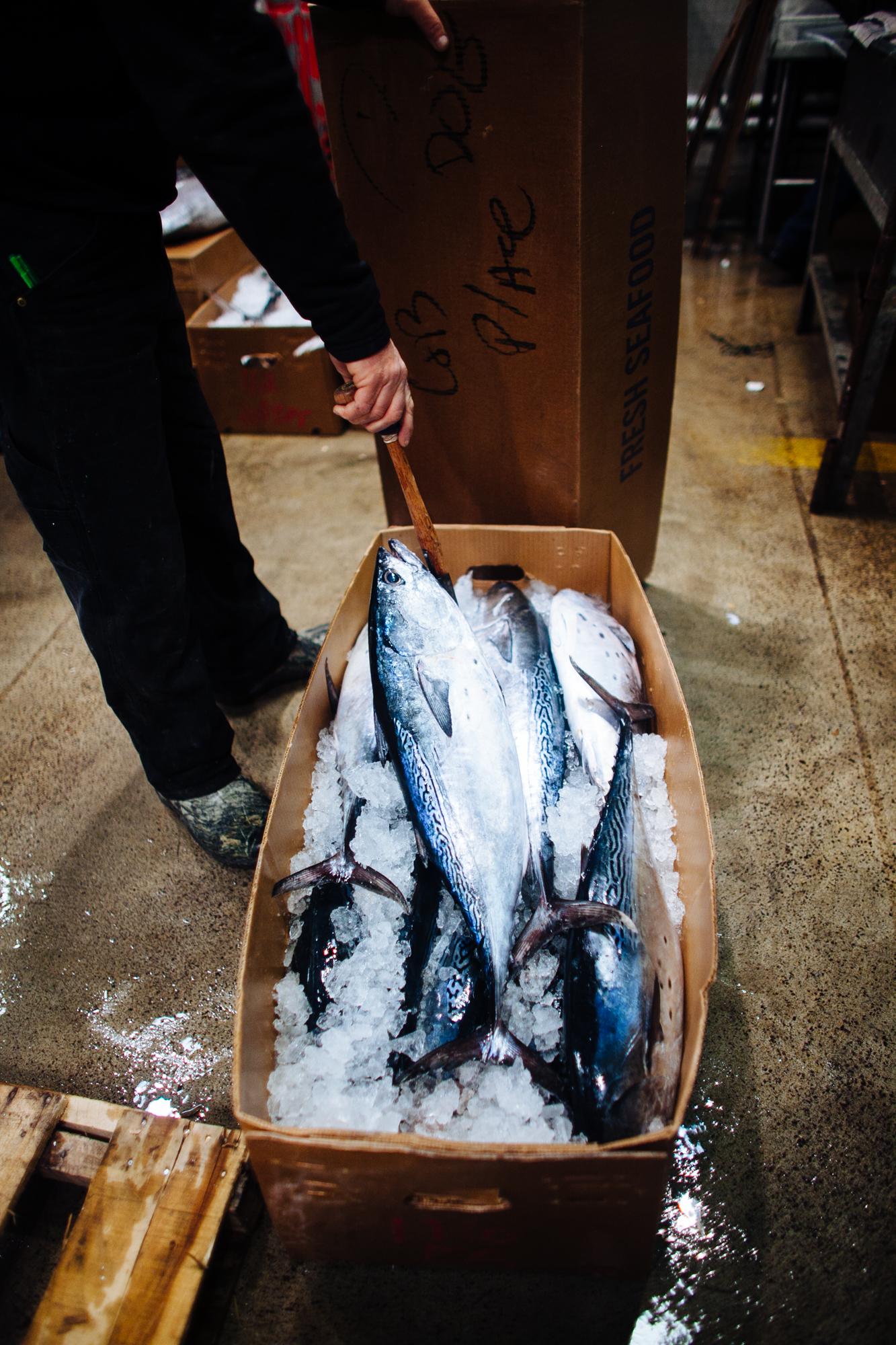 HeatherPhelpsLipton-Fish-HuntsPoint-FultonFishMarket-43.jpg