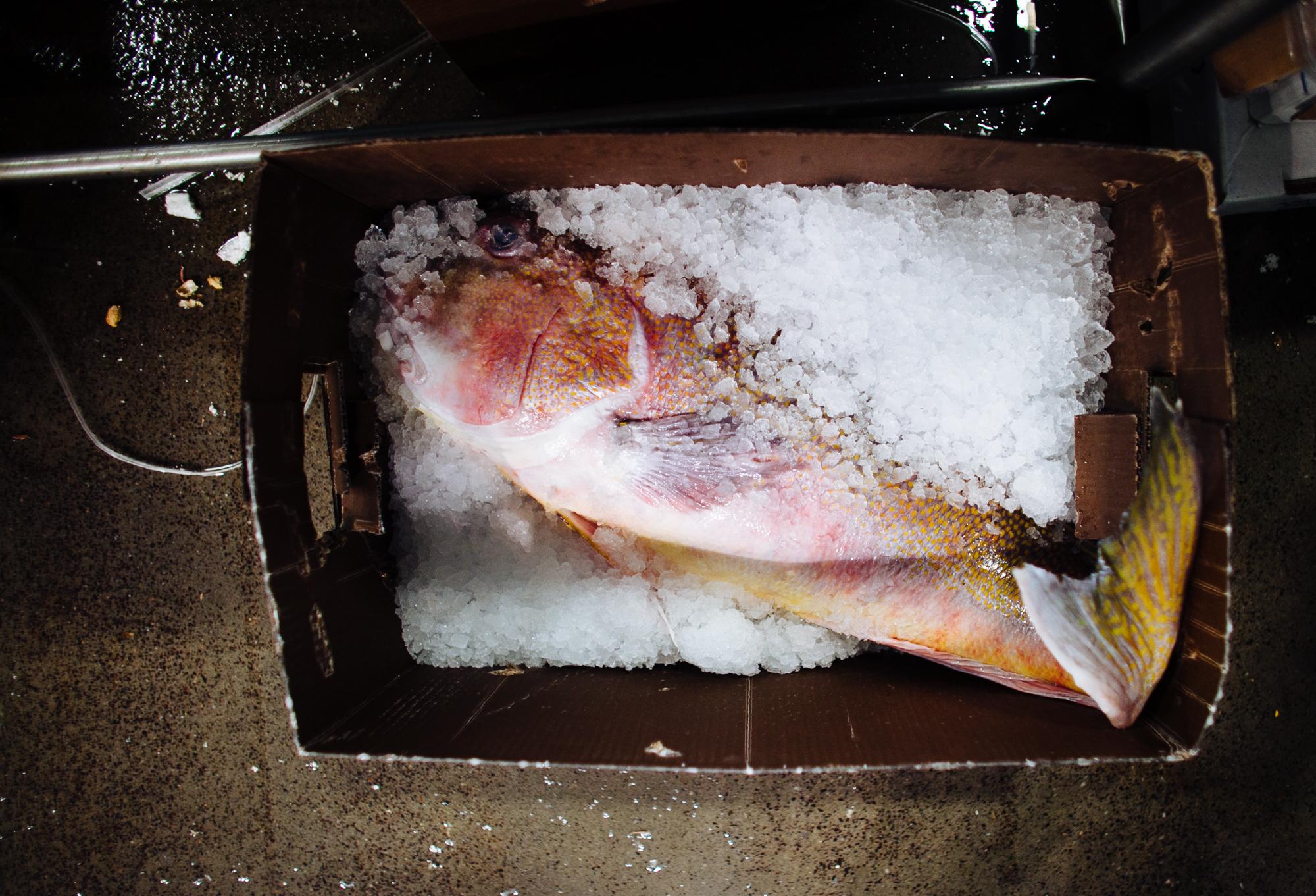 HeatherPhelpsLipton-Fish-HuntsPoint-FultonFishMarket-44.jpg