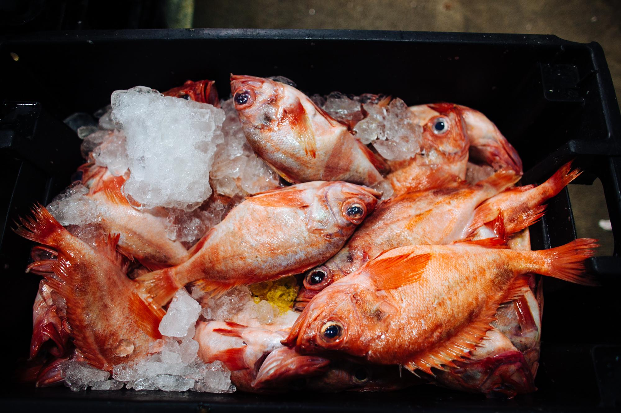 HeatherPhelpsLipton-Fish-HuntsPoint-FultonFishMarket-48.jpg