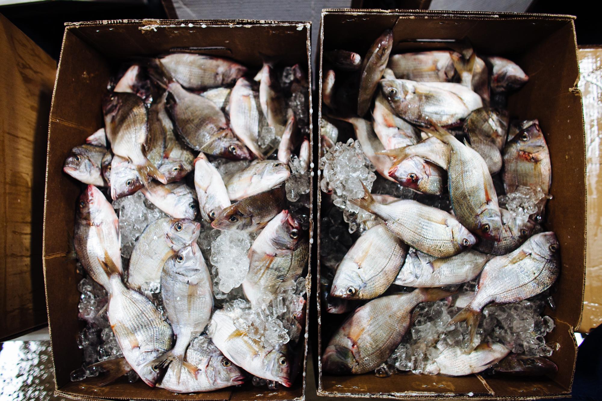 HeatherPhelpsLipton-Fish-HuntsPoint-FultonFishMarket-51.jpg