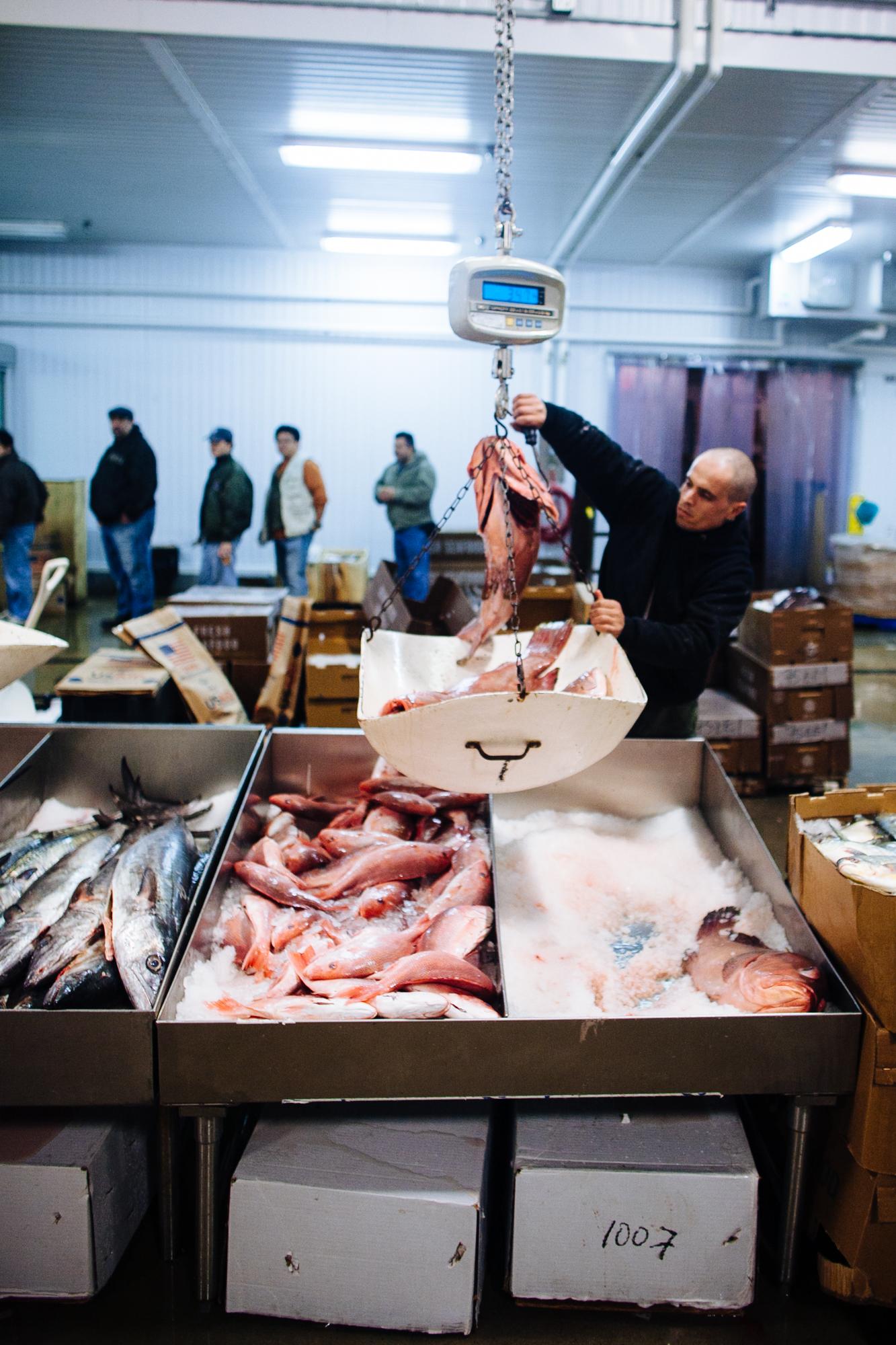 HeatherPhelpsLipton-Fish-HuntsPoint-FultonFishMarket-52.jpg