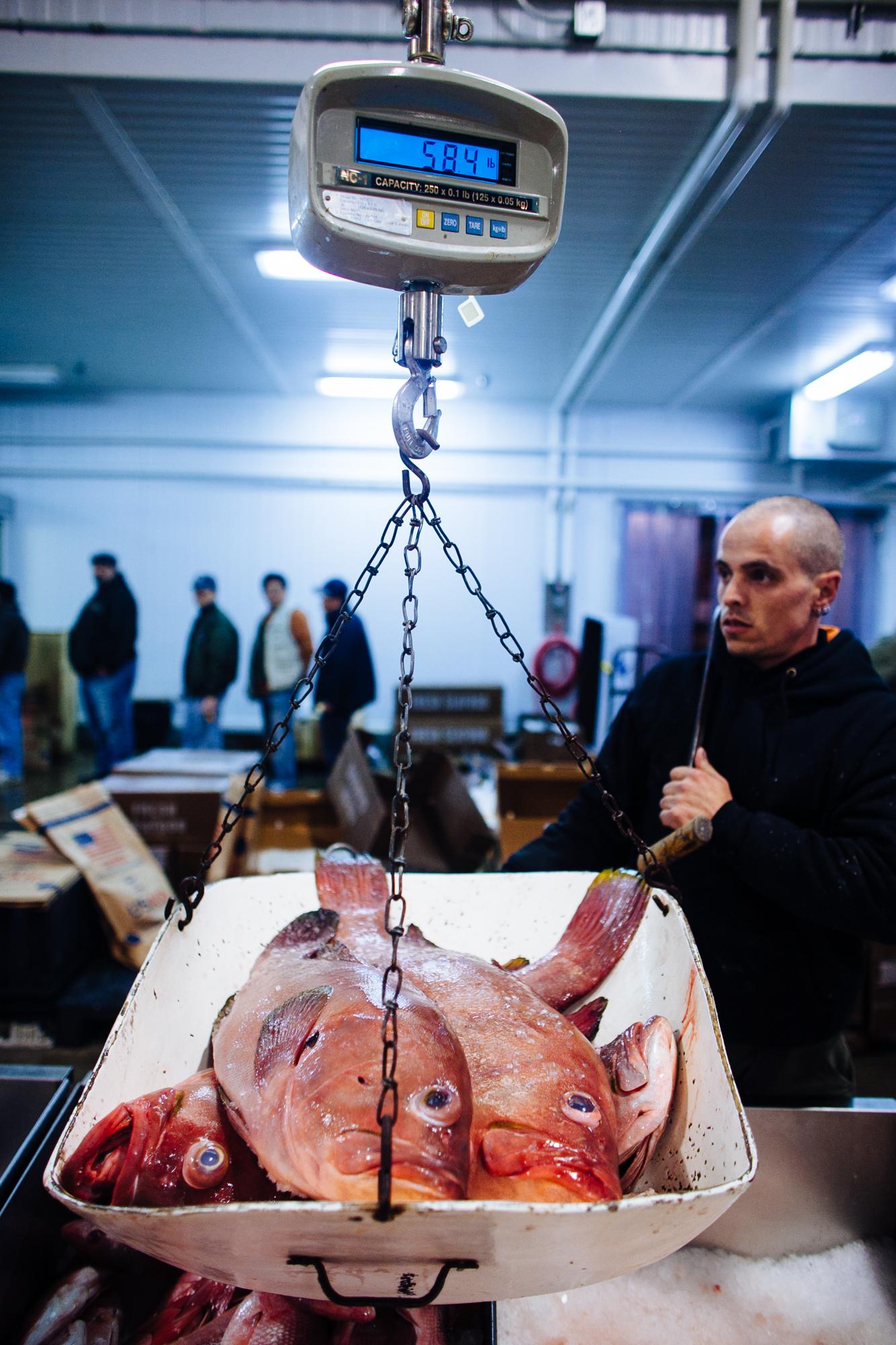 HeatherPhelpsLipton-Fish-HuntsPoint-FultonFishMarket-53.jpg