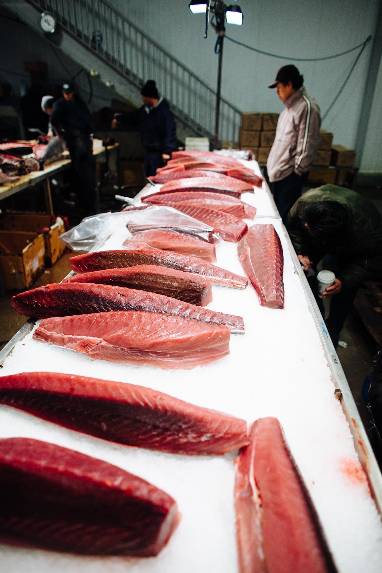 HeatherPhelpsLipton-Fish-HuntsPoint-FultonFishMarket-58.jpg