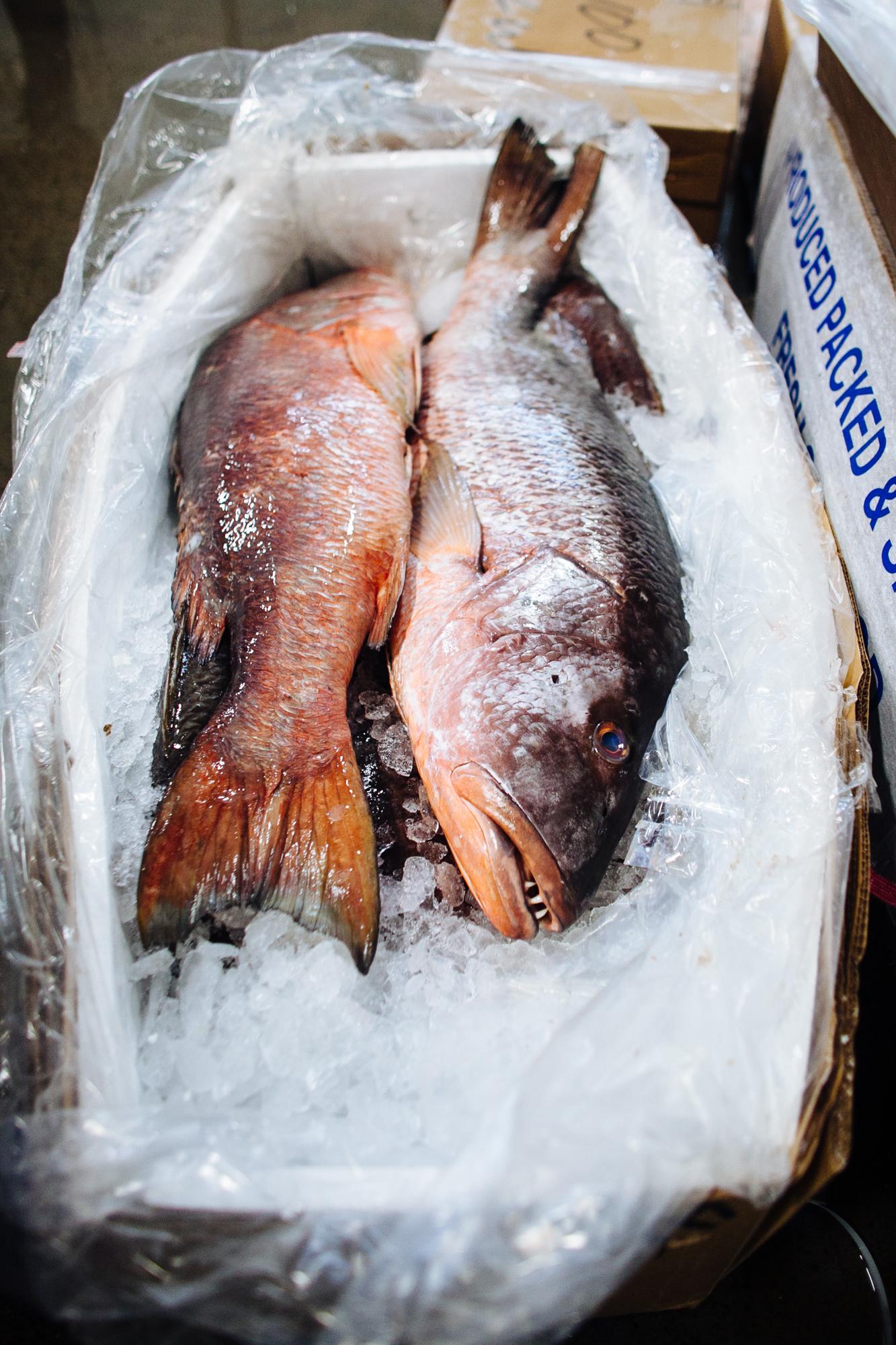 HeatherPhelpsLipton-Fish-HuntsPoint-FultonFishMarket-59.jpg