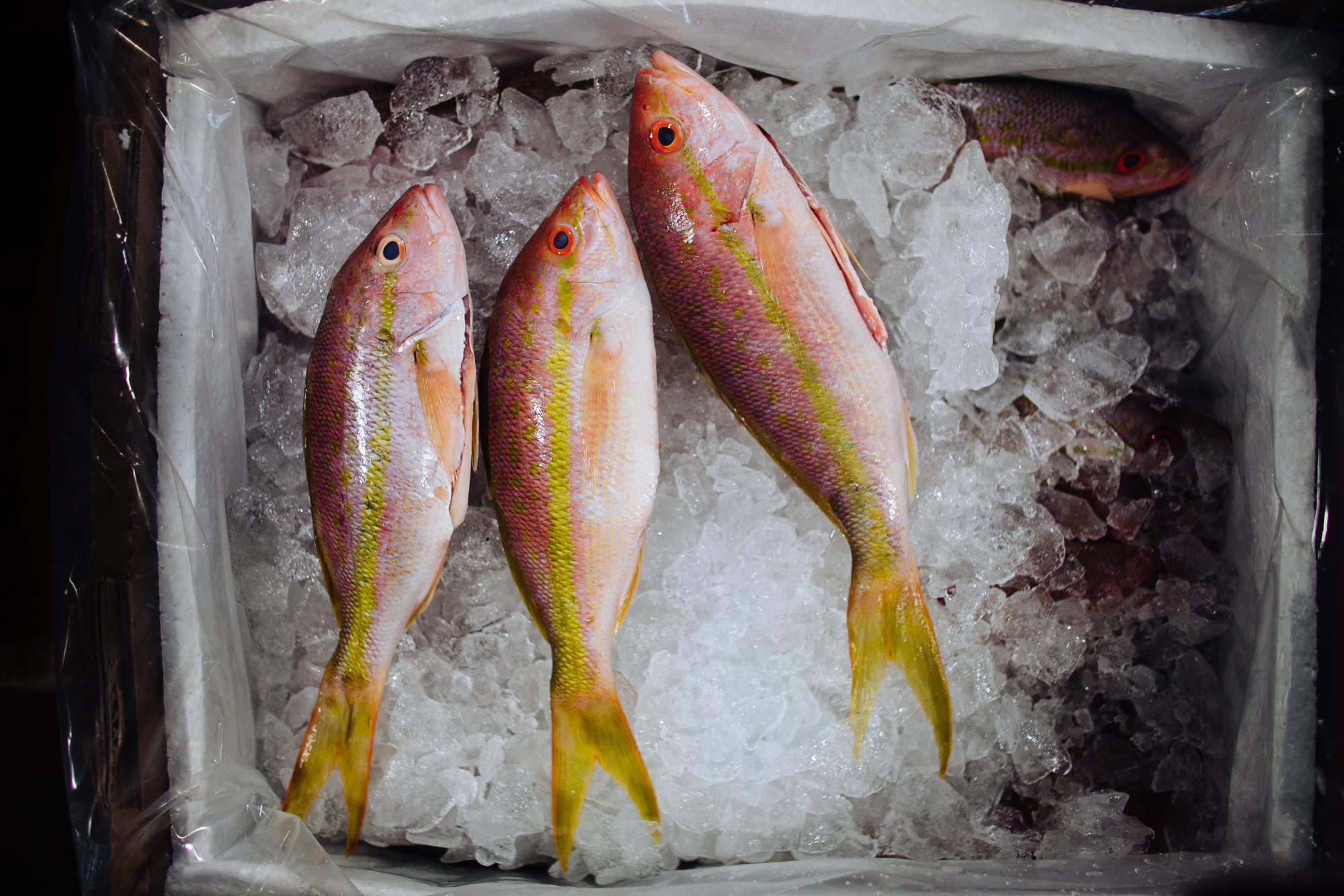 HeatherPhelpsLipton-Fish-HuntsPoint-FultonFishMarket-62.jpg