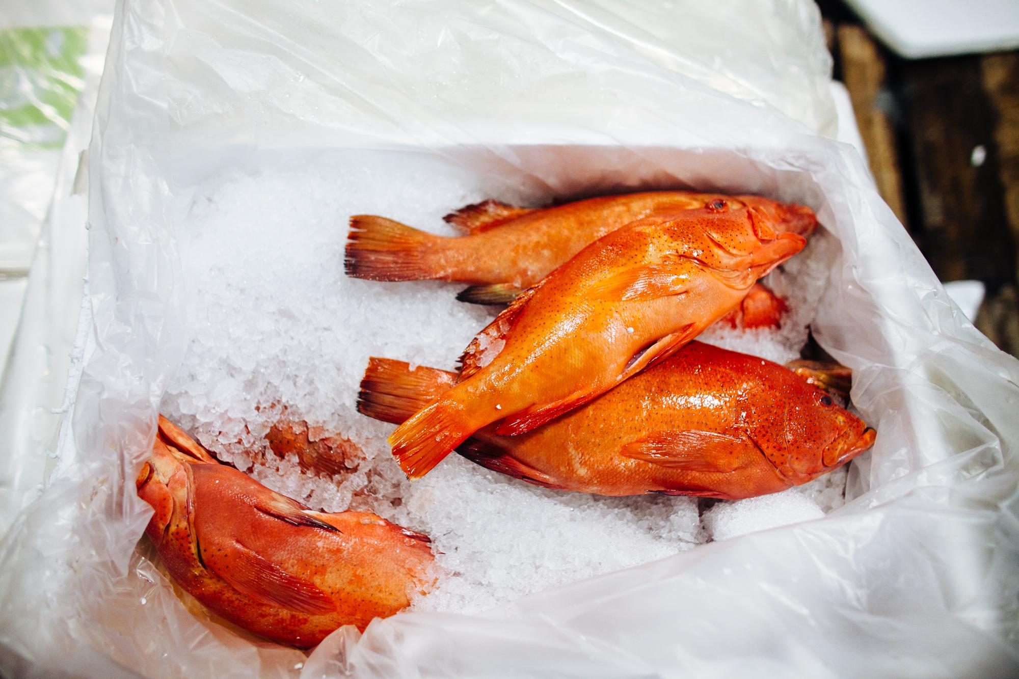 HeatherPhelpsLipton-Fish-HuntsPoint-FultonFishMarket-63.jpg
