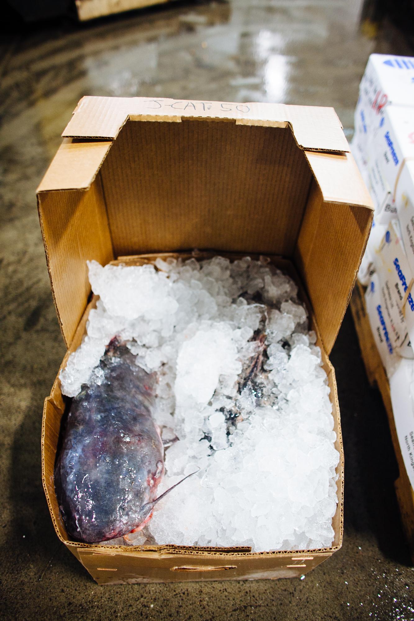 HeatherPhelpsLipton-Fish-HuntsPoint-FultonFishMarket-73.jpg