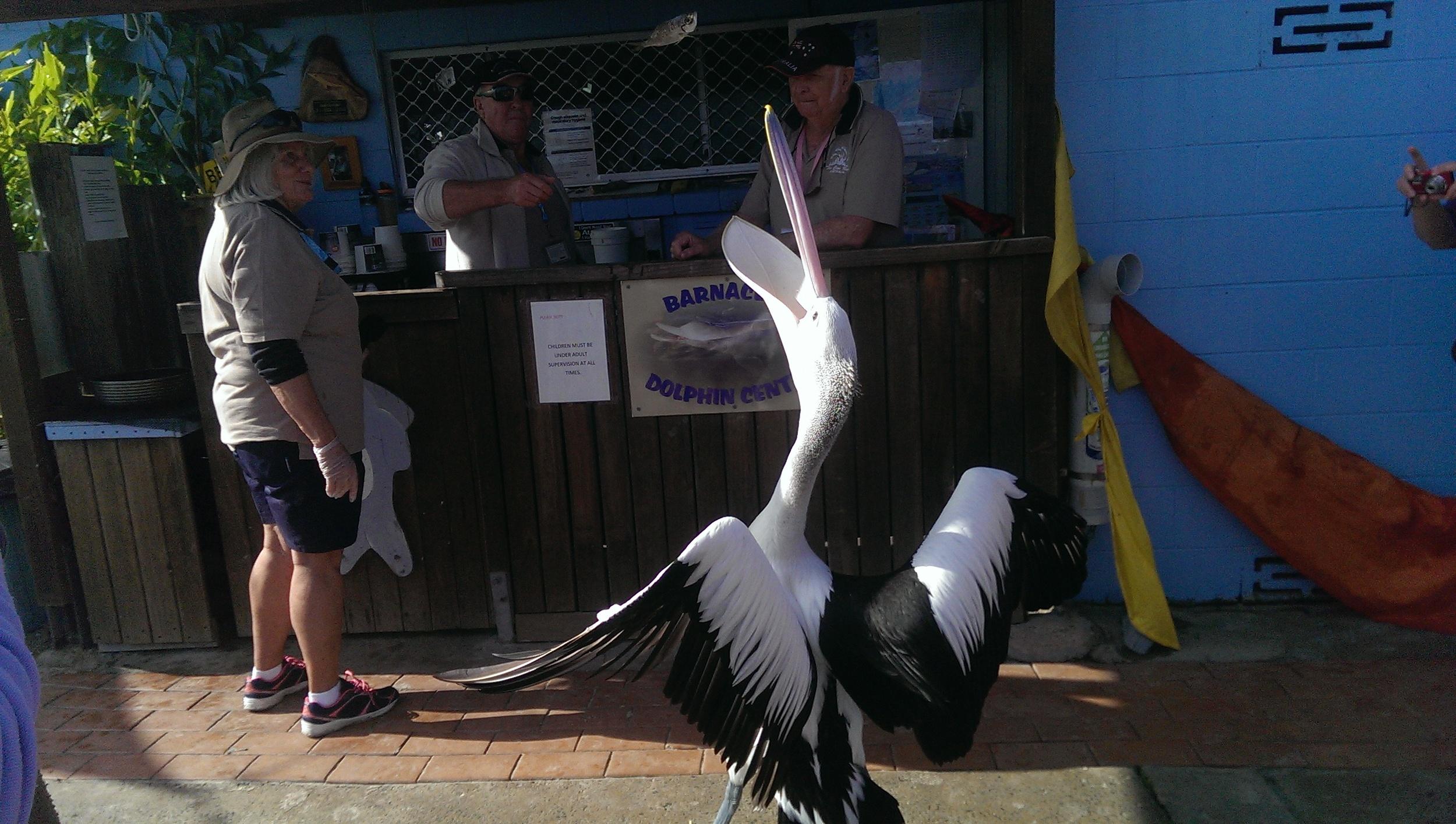 pelican tin can bay