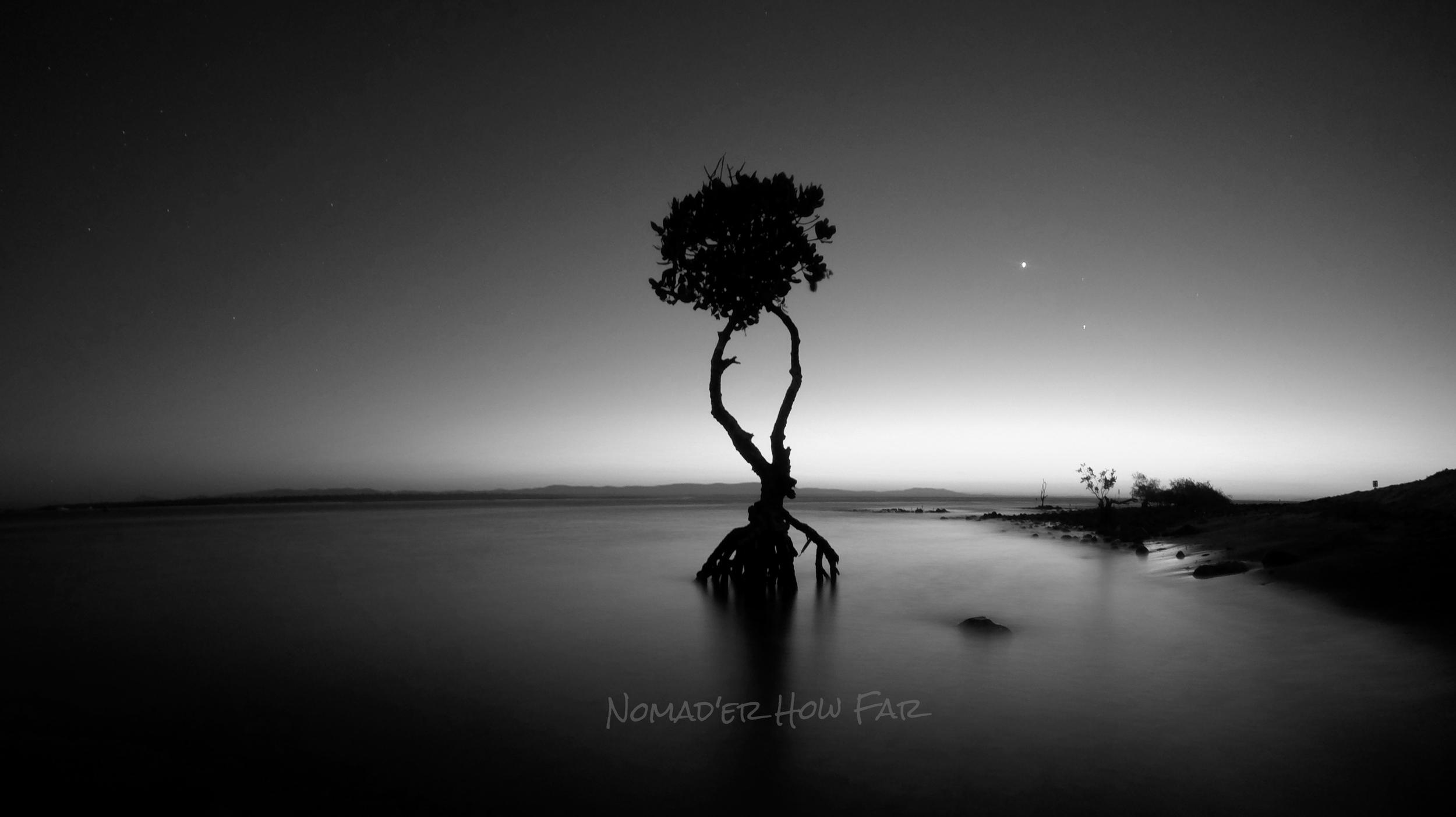 mangrove black & white