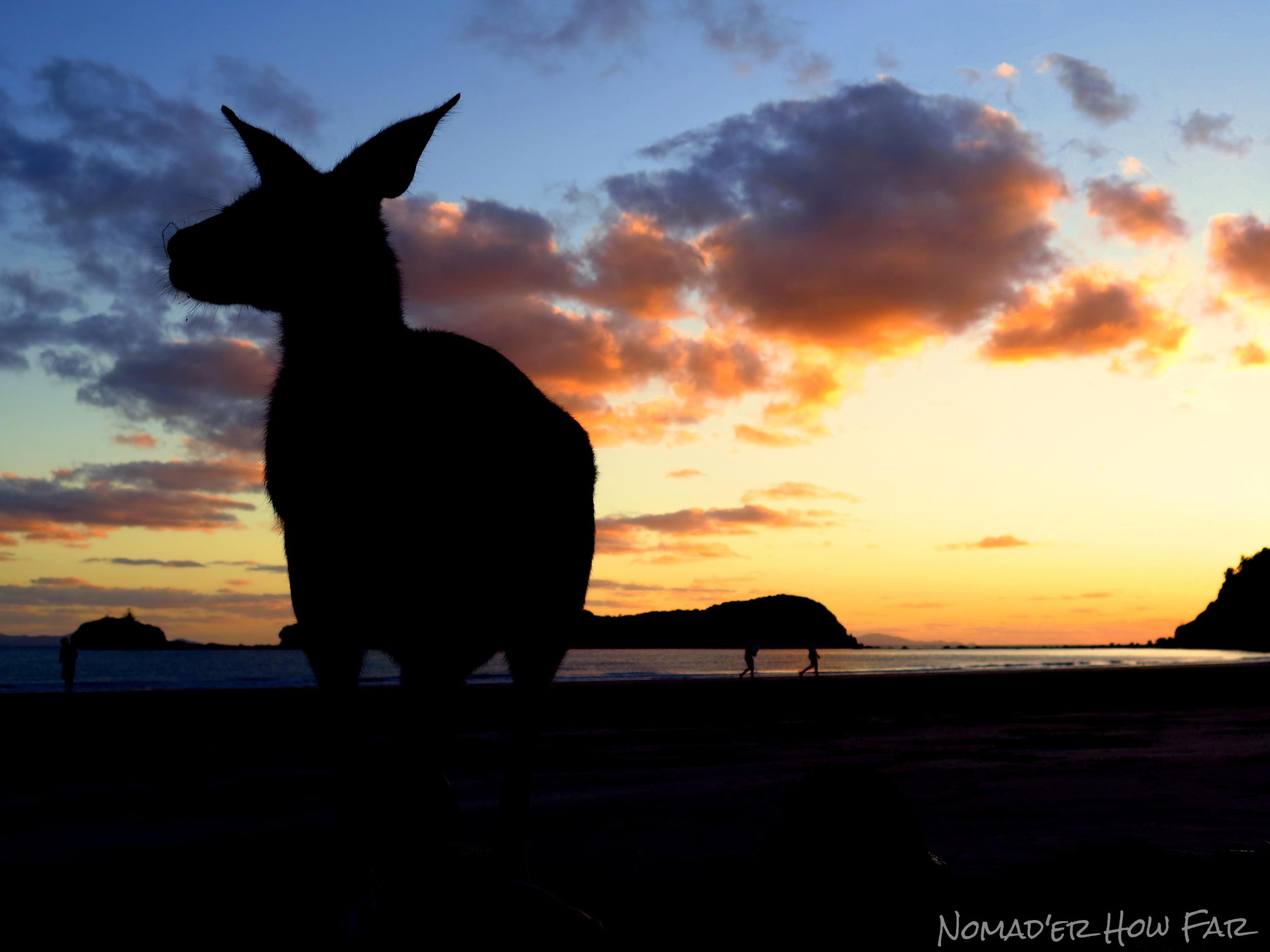 Kangaroos At Sunrise In Australia - Nomad'er How Far