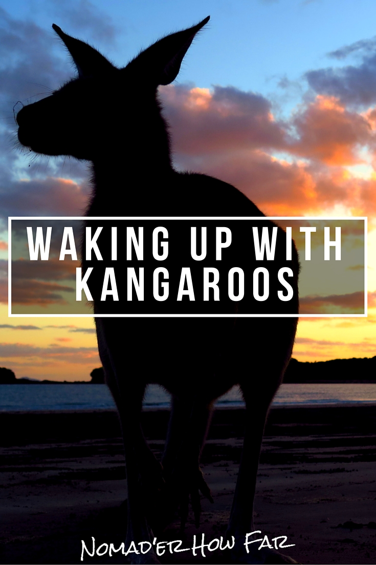 Australian sunrises and sunsets, have a particular serene beauty about them, something peaceful, warm and calm. Australia also has a shit-ton of kangaroos hopping around. When you combine the two, its pretty spectacular.