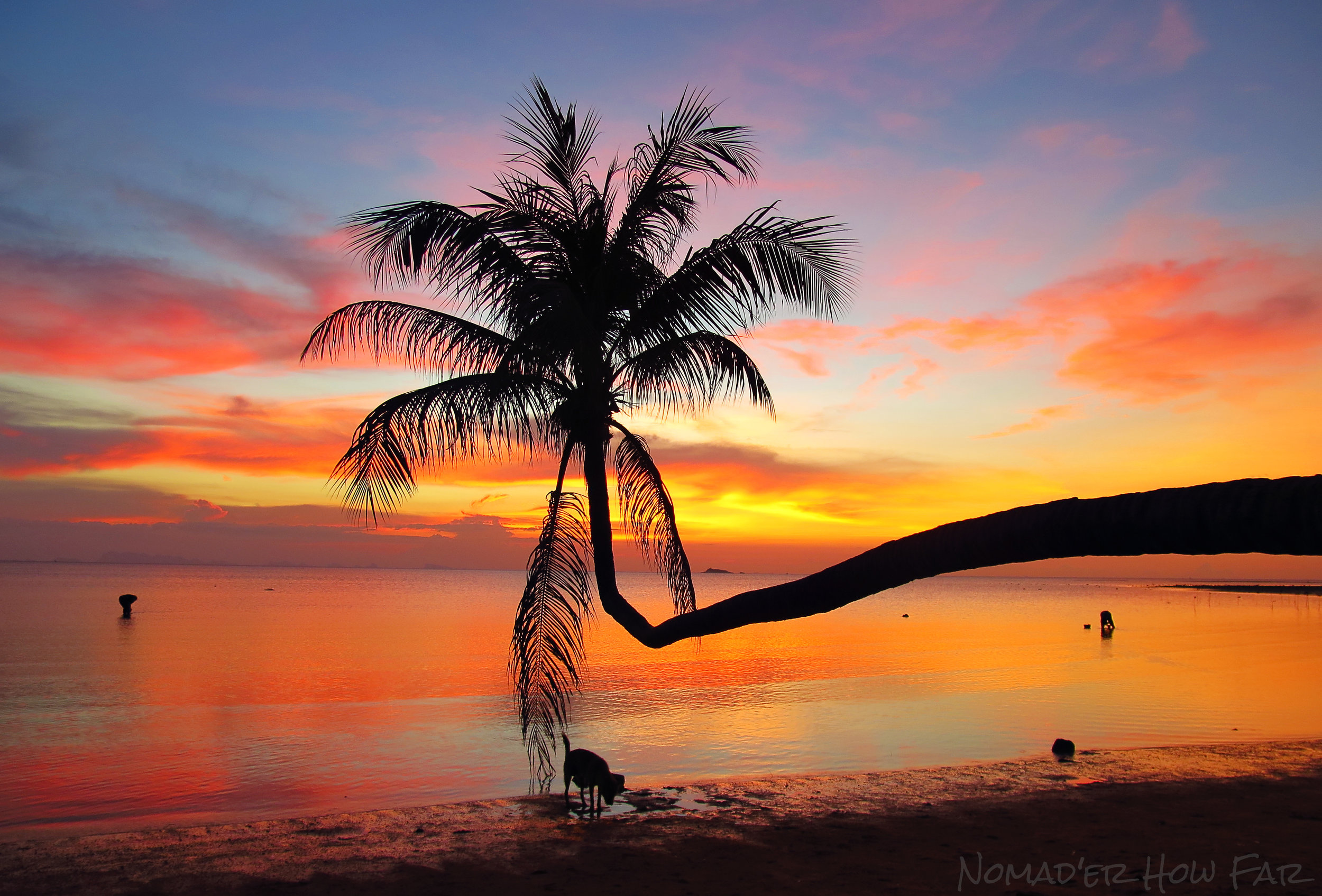 Leaning palm sunset, Koh Phangan - Thailand