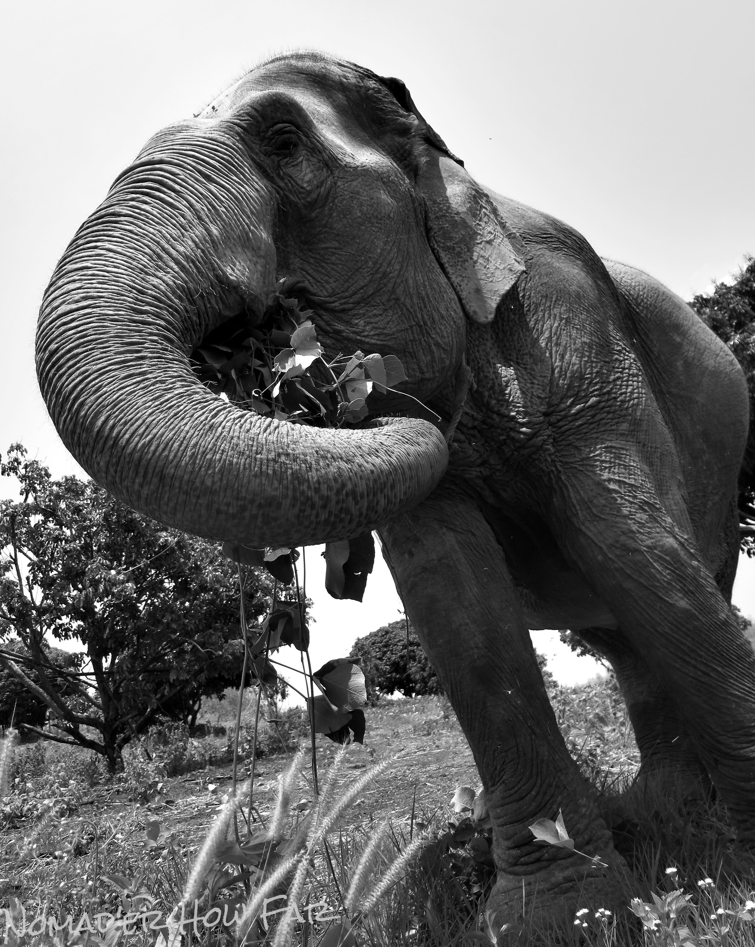 Elephant sanctuary - Chiang Mai, Thailand