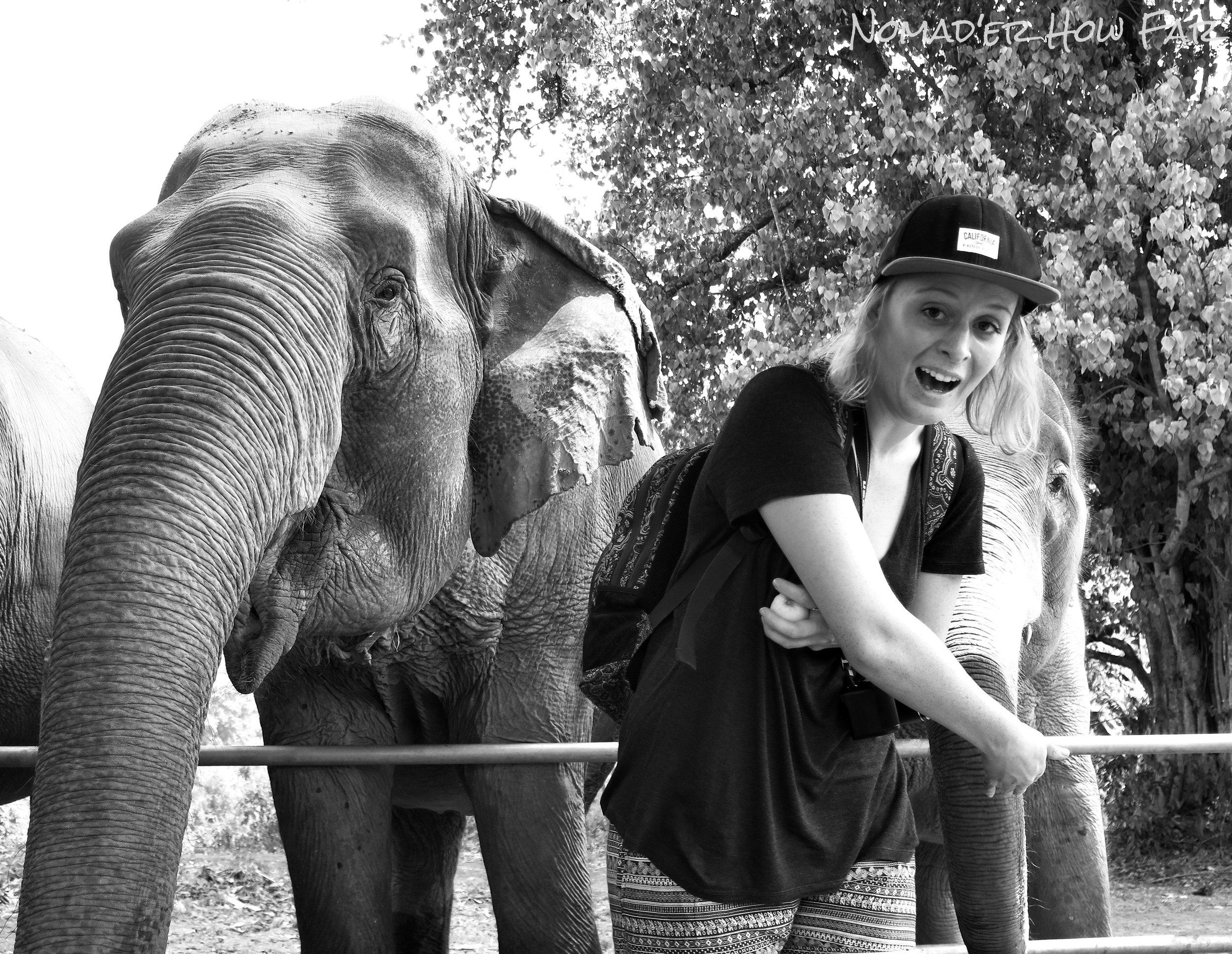 cheeky elephant