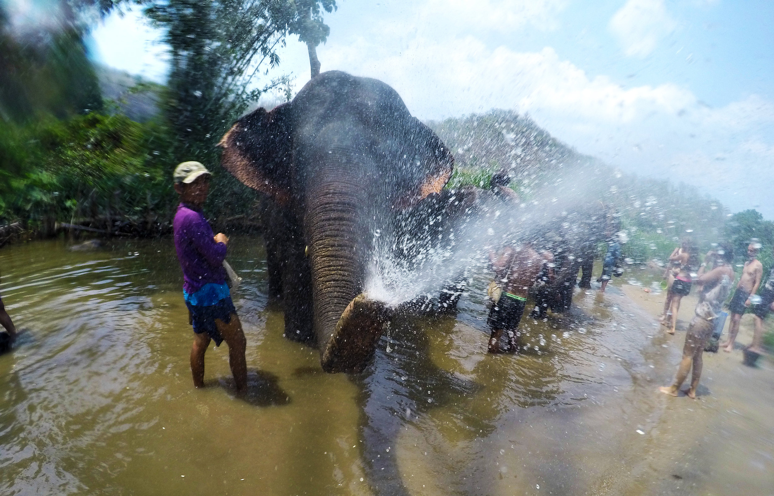 elephant splash