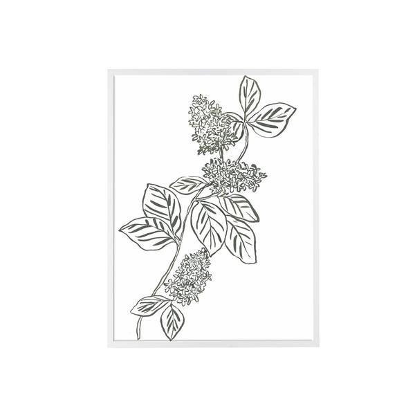 Hydrangea_Sketch_600x600_crop_center.jpg