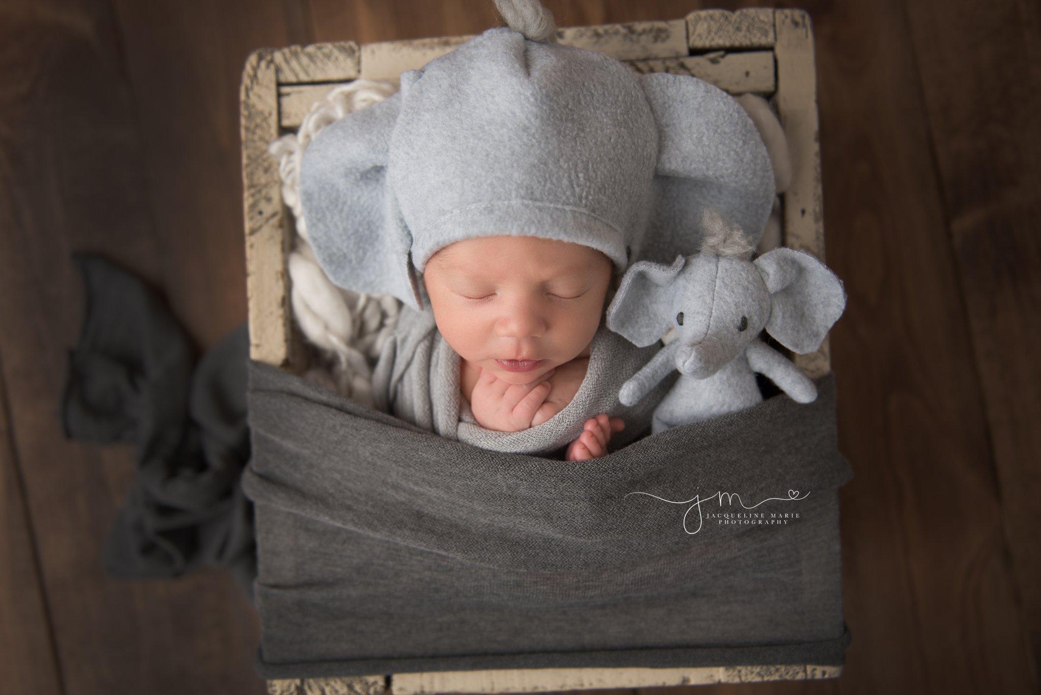 columbus ohio newborn photographer features newborn baby boy wearing elephant hat for newborn pictures