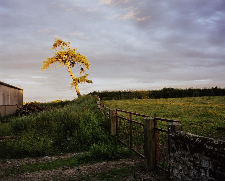 (Self Portrait As a Tree, Sam Taylor Johnson, 2001)