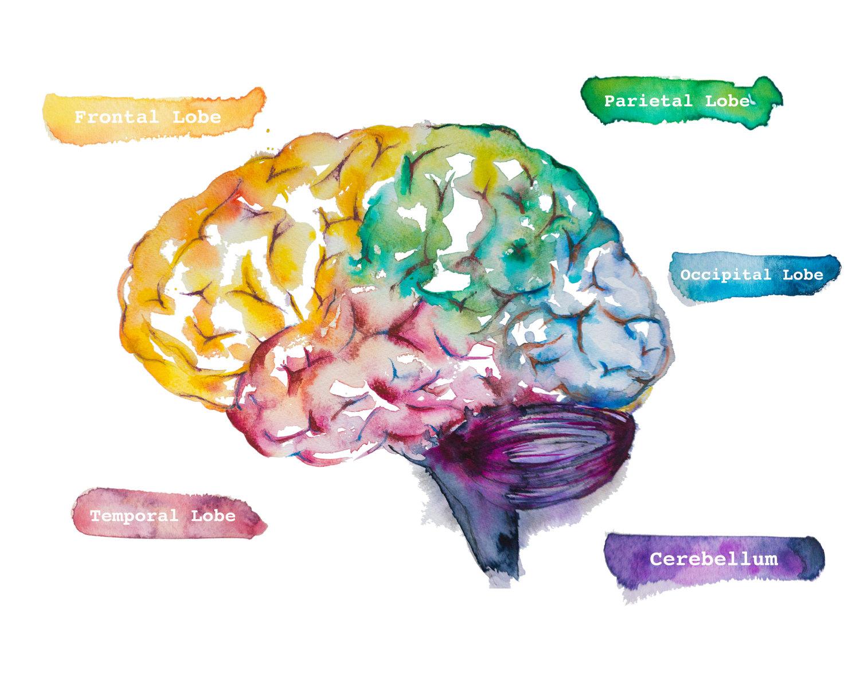 Neuroscience Graphic hm.jpg
