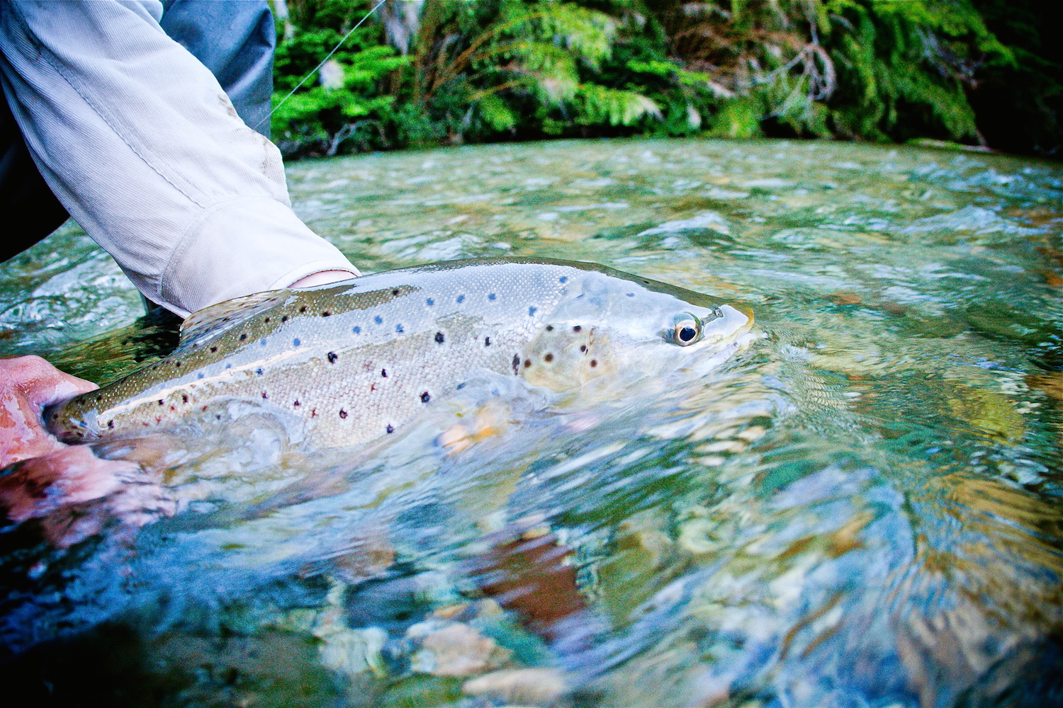 A beautiful brown from the Rivadavia
