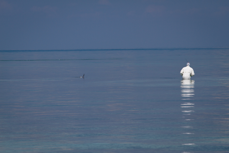 My crazy for Permit guide Bemba, stalking a tailing fish.
