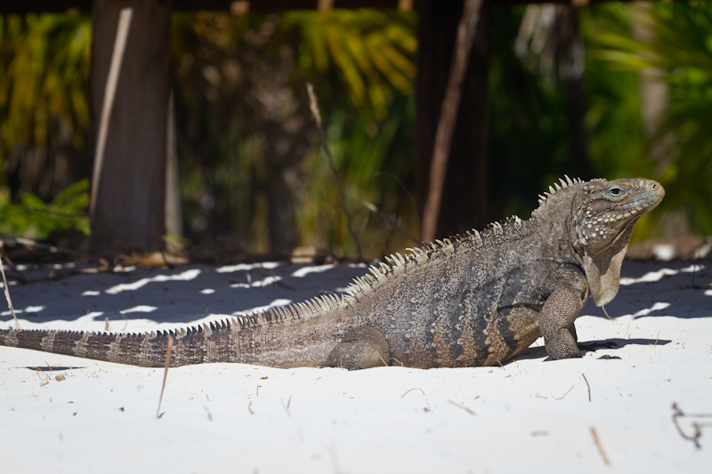 A friendly native of Cayo Largo visits us during lunch.