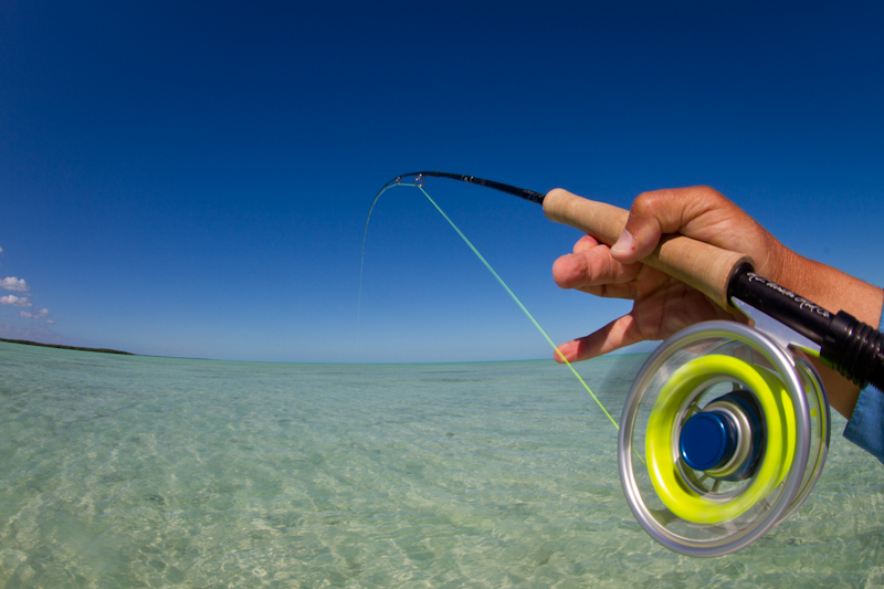Parting shot from my time in Cuba.....this fish heading for Key West.