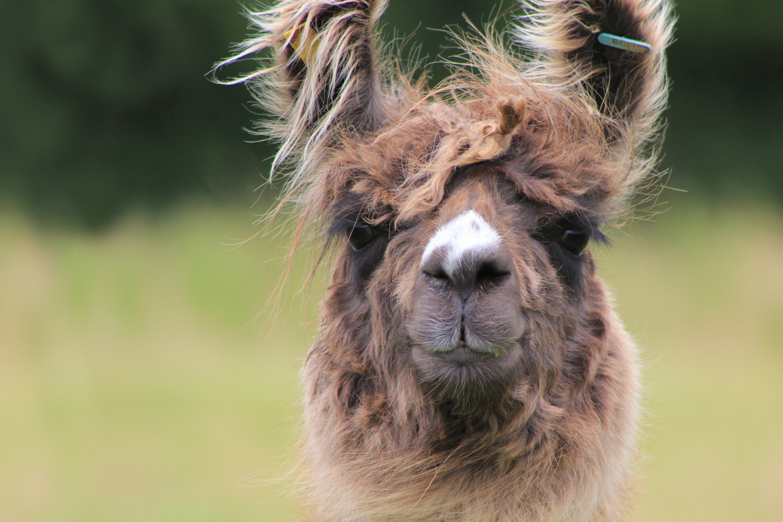 Llama-Lland_slideshow-1.jpg
