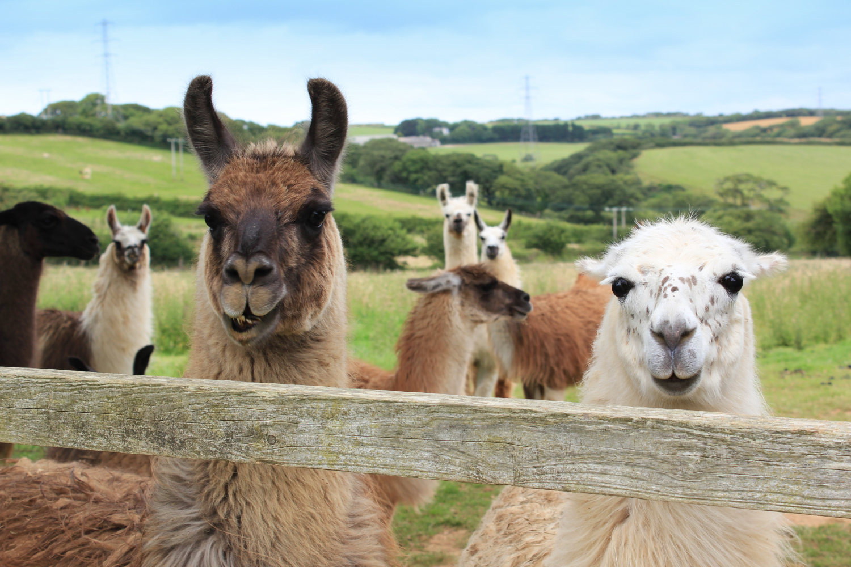 Llama-Lland_slideshow-9.jpg
